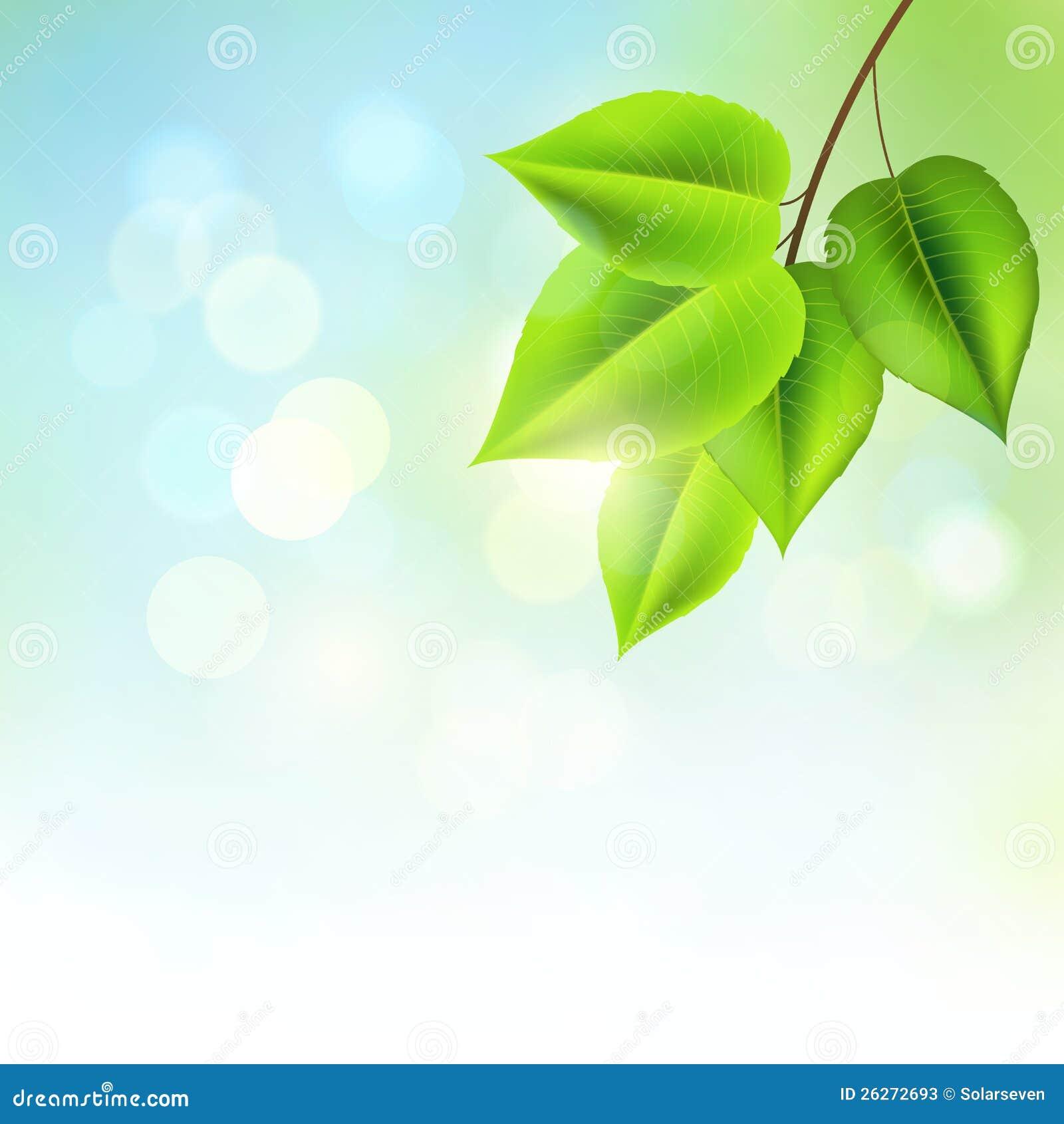 新鲜的绿色叶子