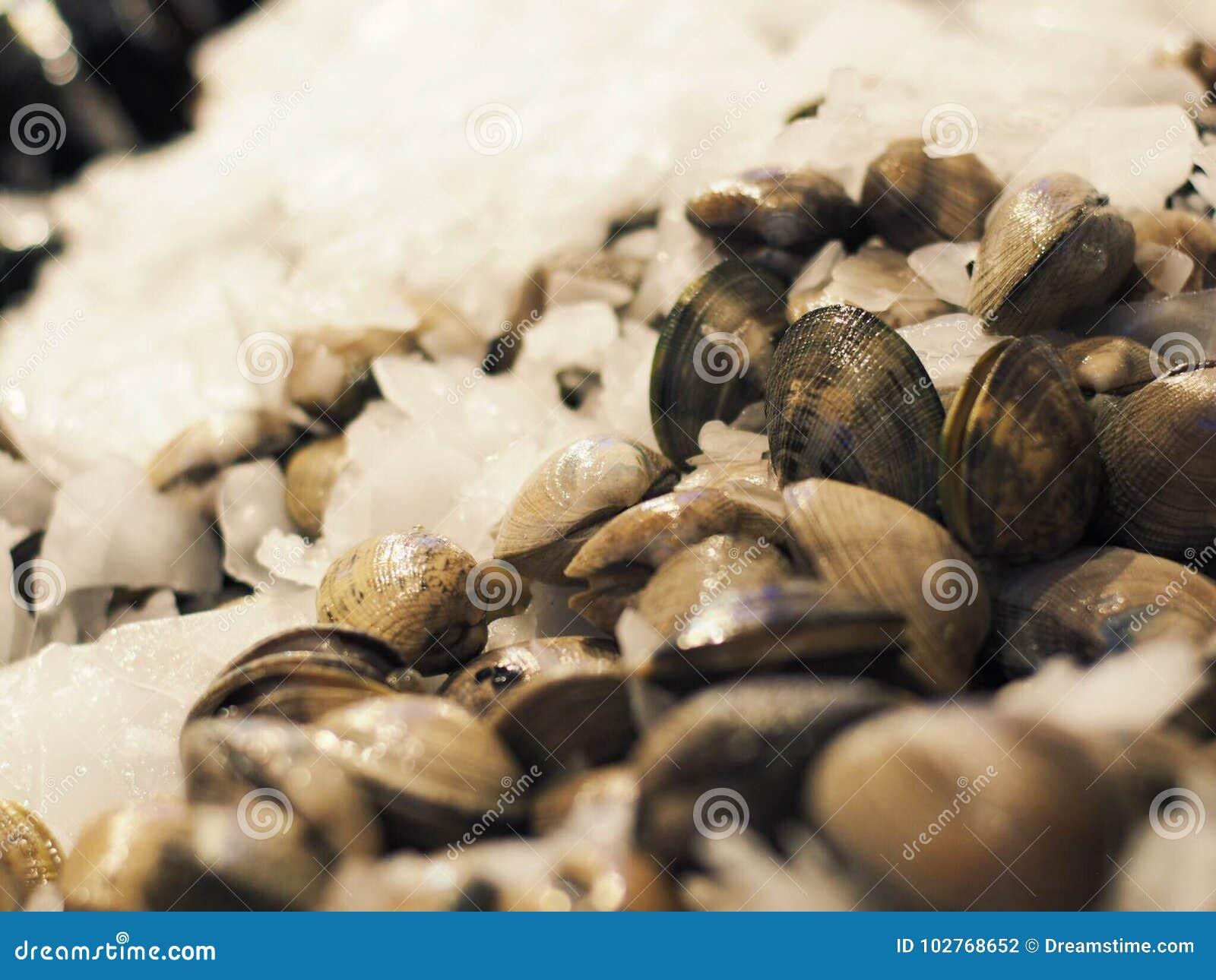 新鲜的蛤蜊在市场上