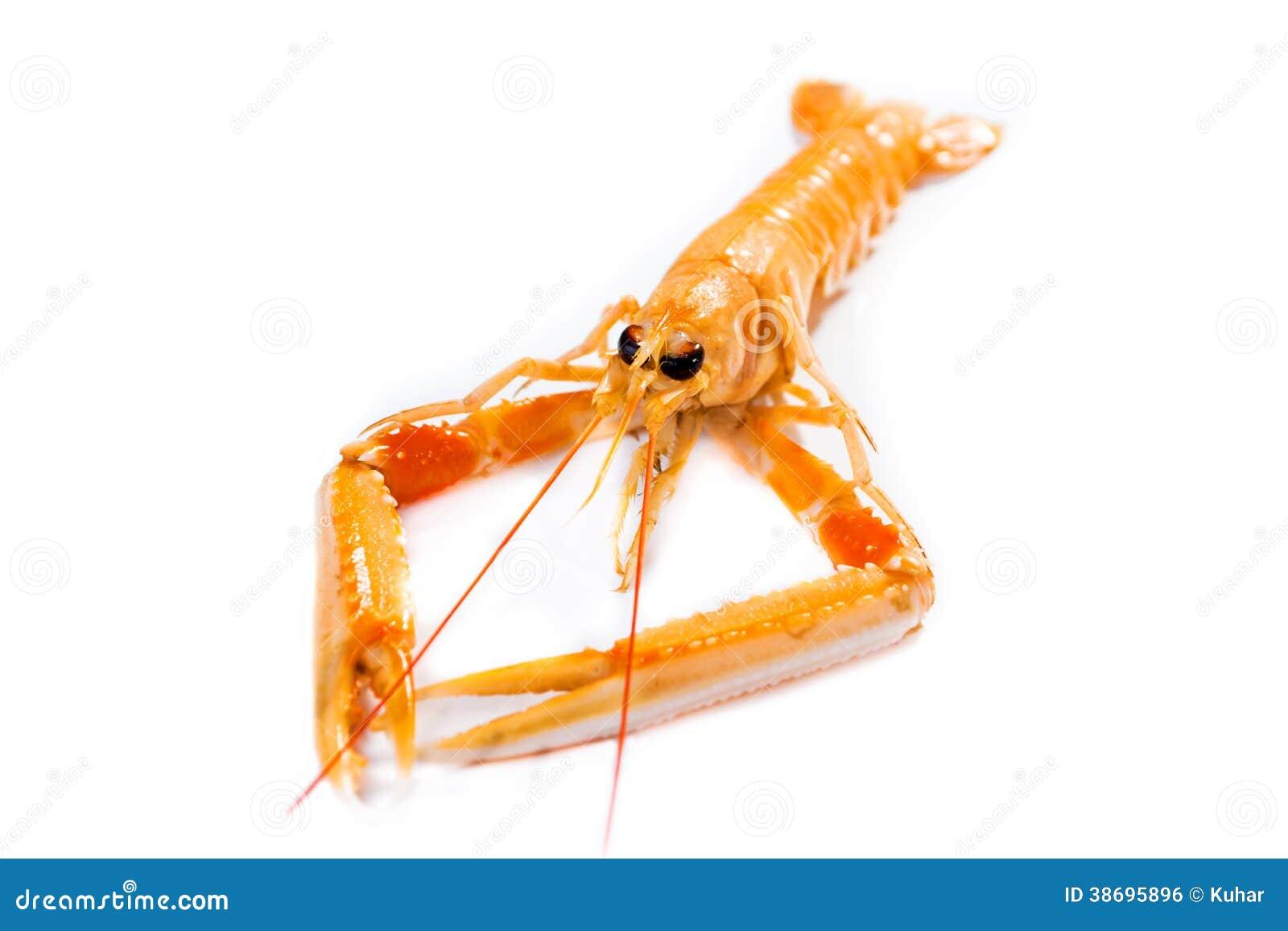 新鲜的Scampi/海螯虾norvegicus