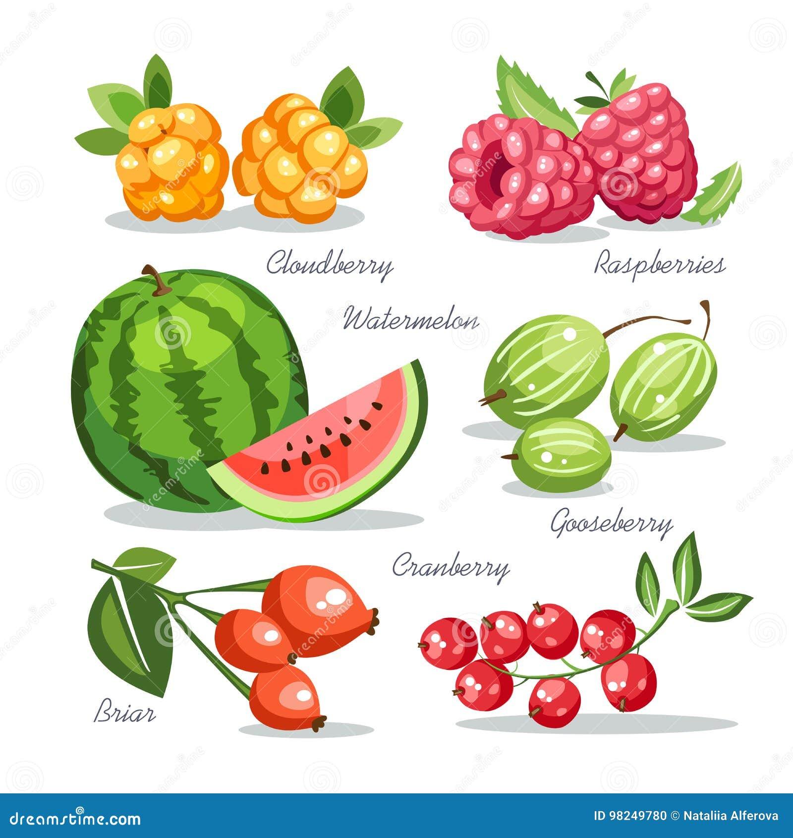 新鲜水果汇集鹅莓野草莓莓西瓜野蔷薇蔓越桔