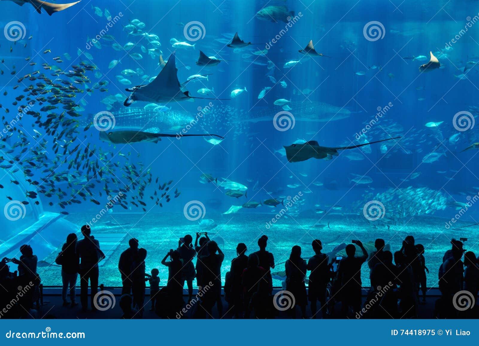 水族馆在冲绳岛市