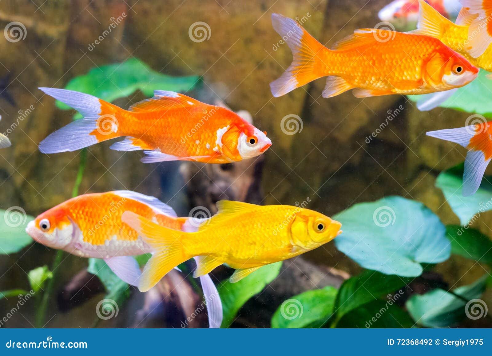 水族馆鱼特写镜头通过玻璃