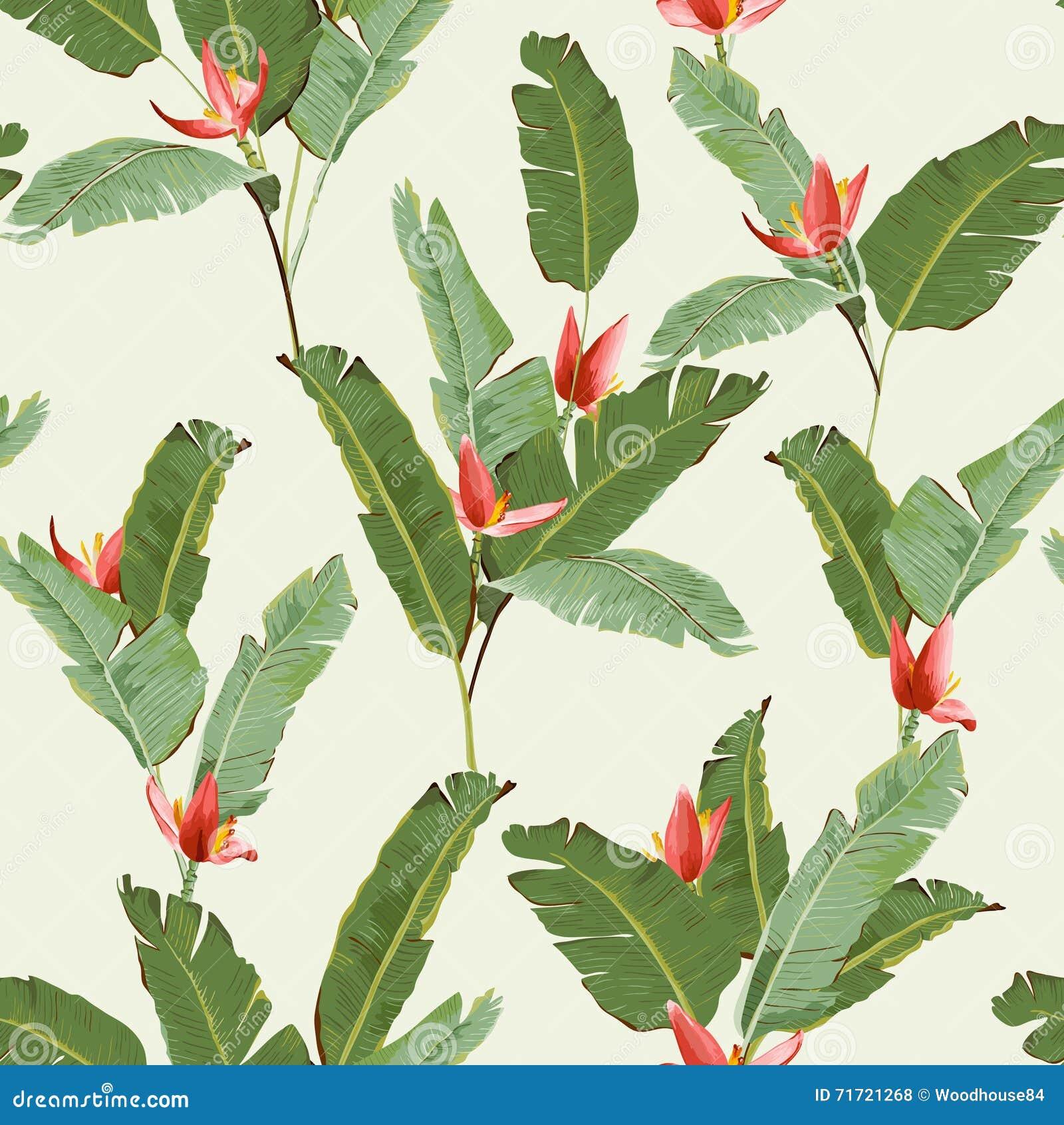 无缝的模式 热带棕榈叶背景 香蕉叶子 香蕉花 向量背景.图片