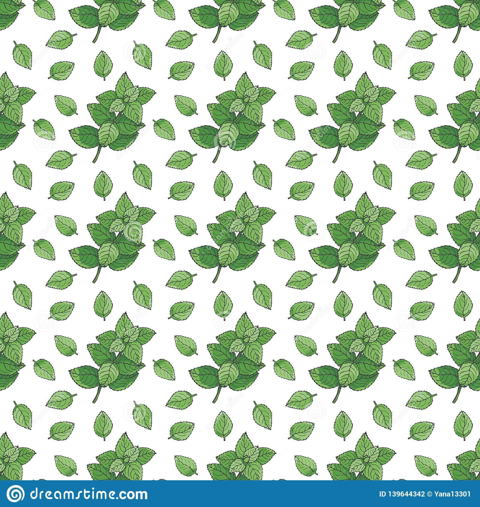 无缝的模式 绿色薄菏和薄荷叶在白色背景