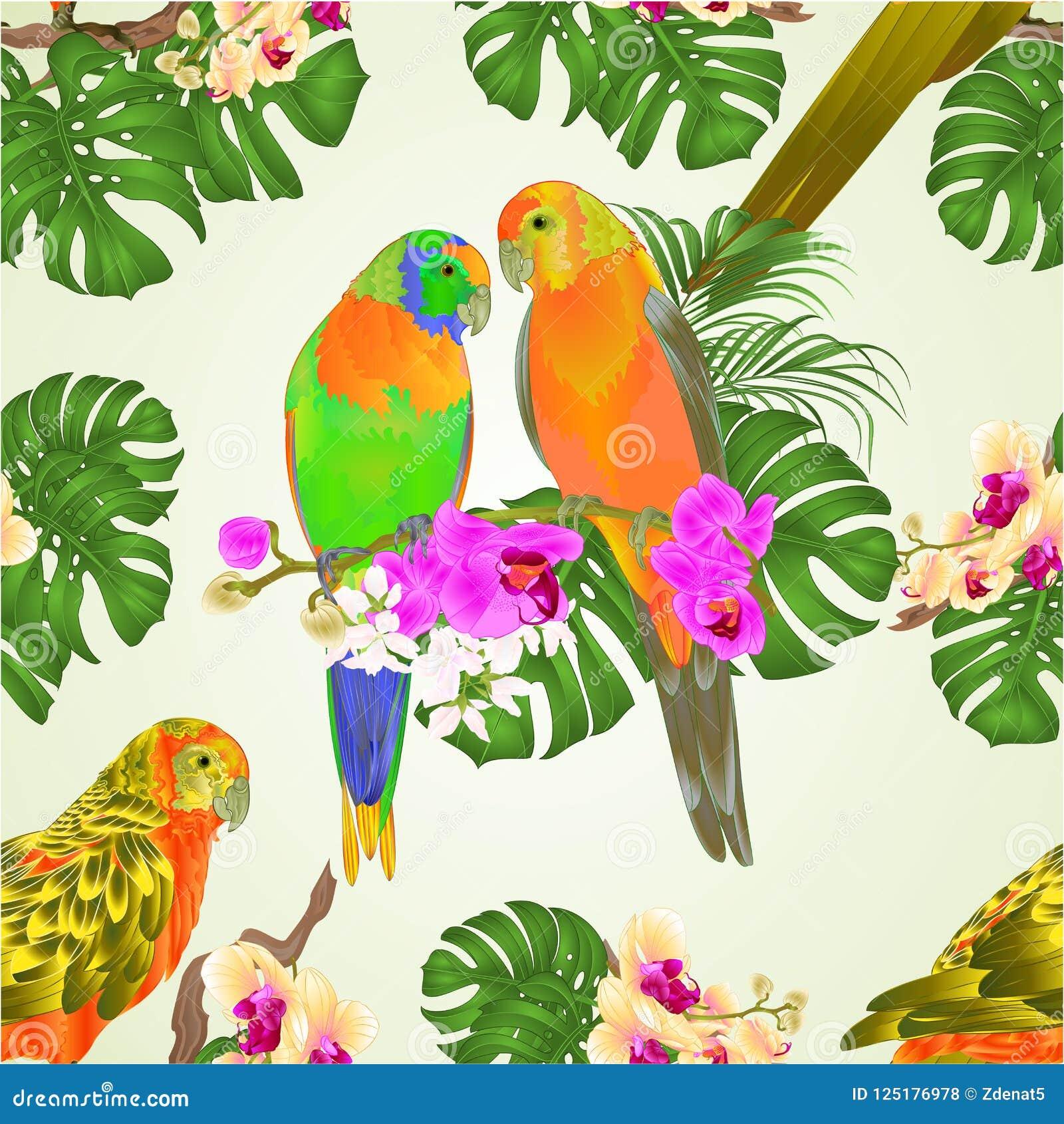 无缝的纹理太阳Conure模仿与美丽的兰花和爱树木的人编辑可能传染媒介的例证的热带异乎寻常的鸟