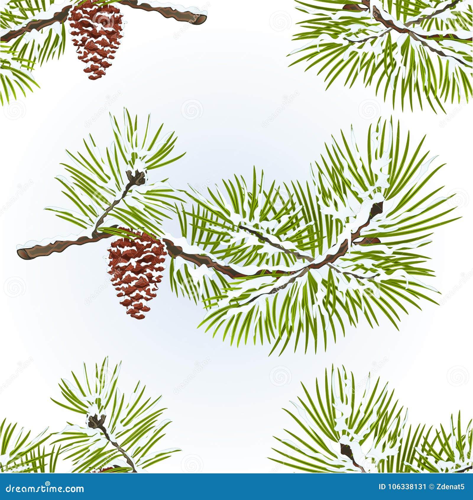 无缝的纹理杉木和杉木锥体分支冬天多雪的自然本底葡萄酒导航编辑可能的例证