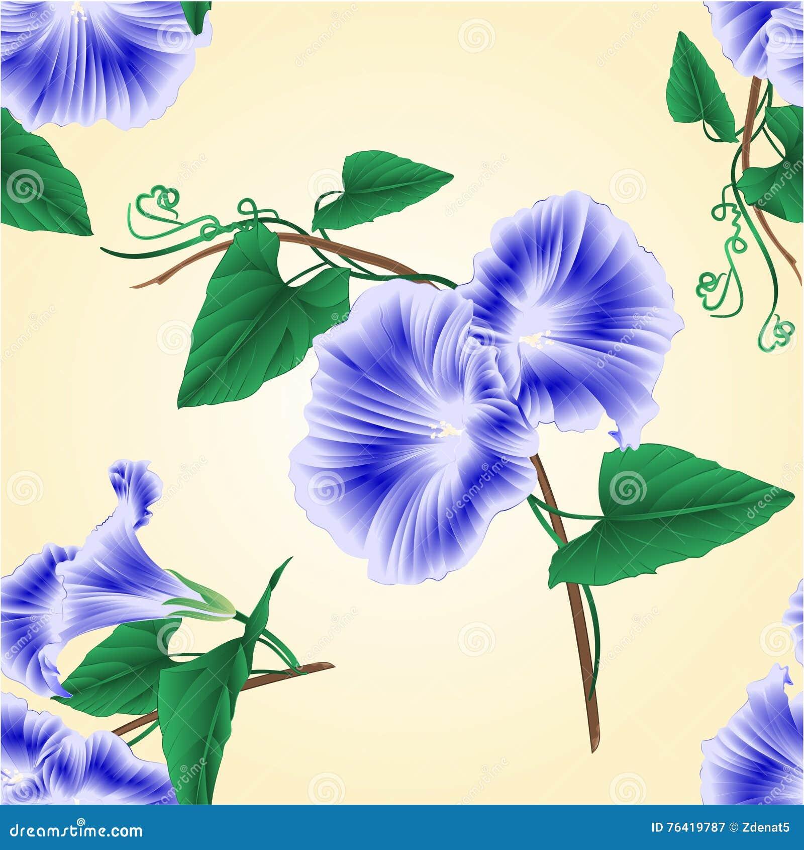 无缝的纹理牵牛花蓝色春天花传染媒介