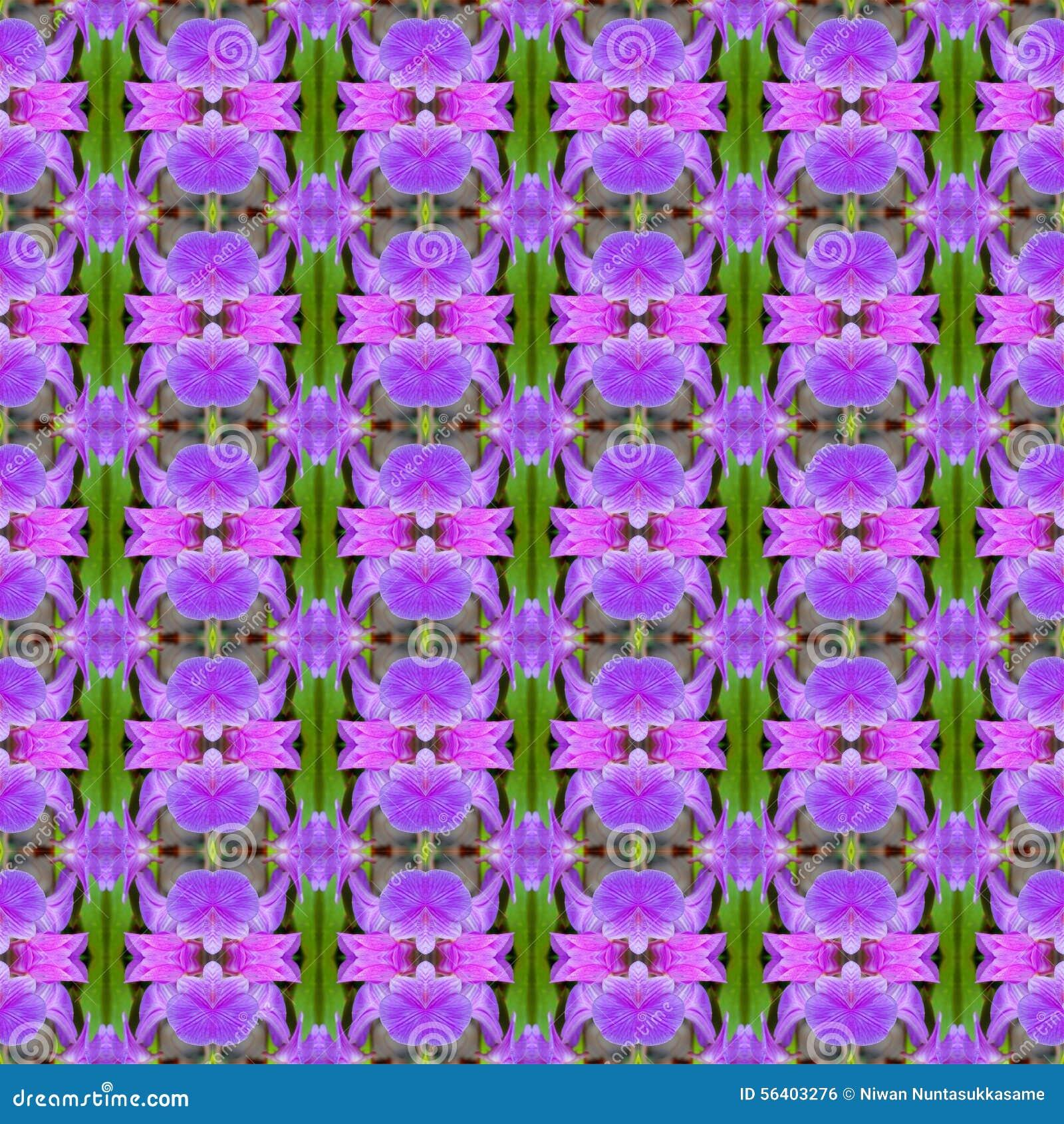 无缝美丽紫色兰花的花
