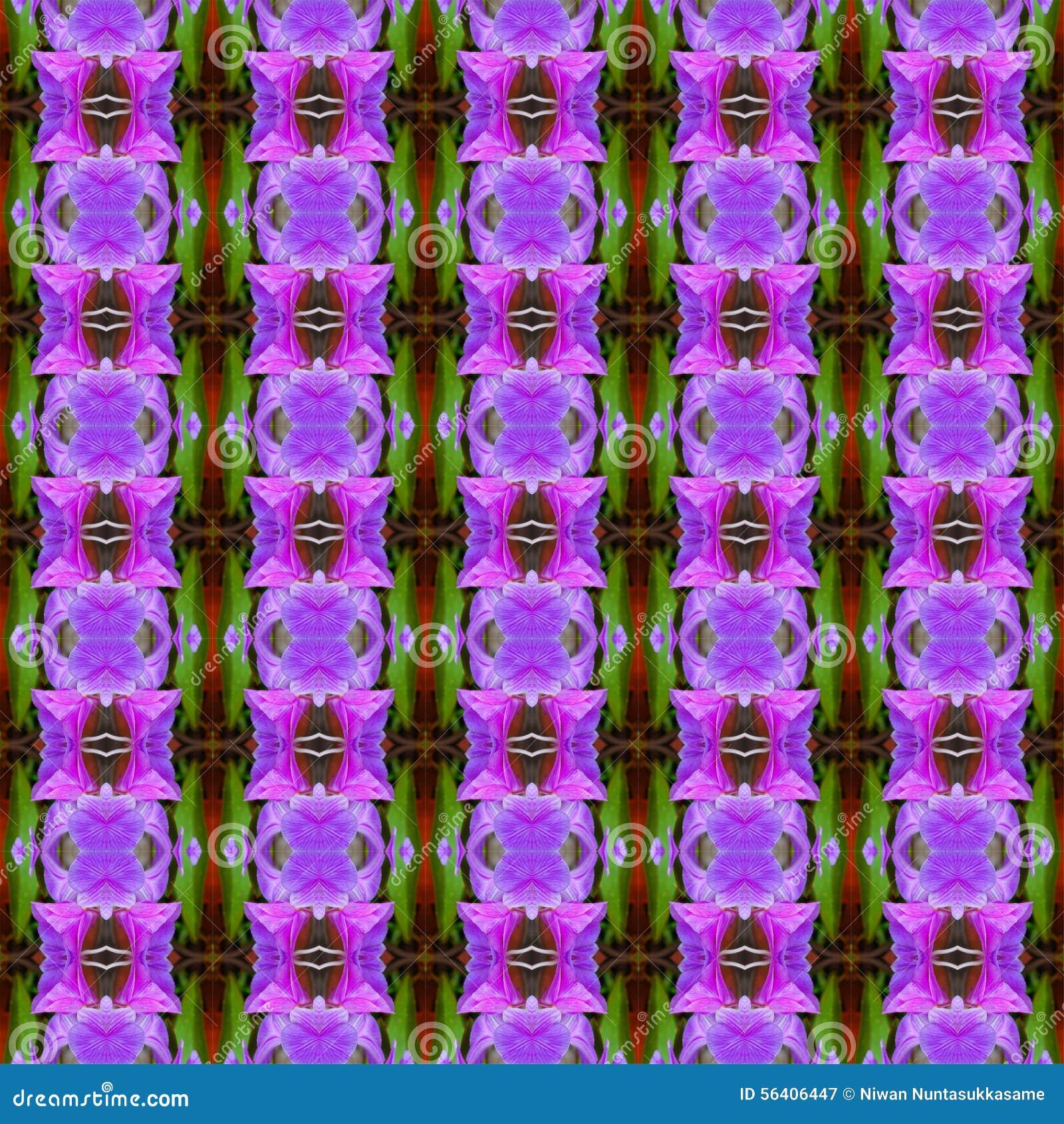 无缝美妙紫色兰花的花