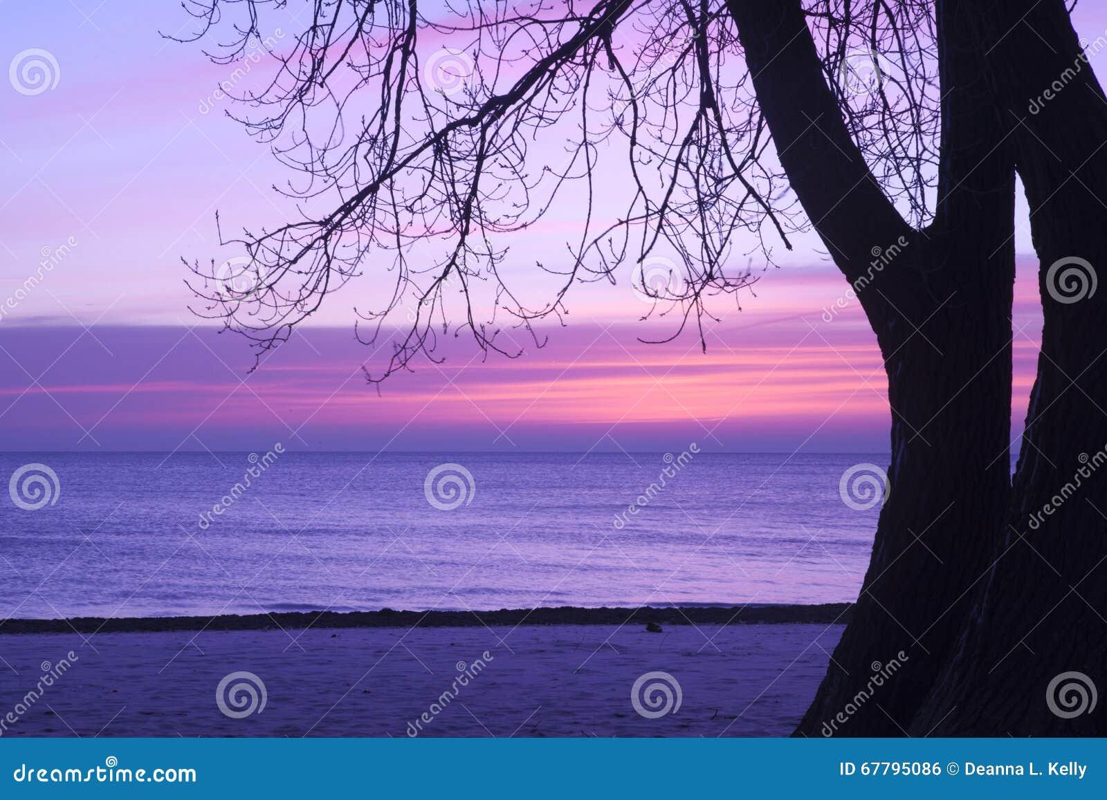 日出在桃红色和淡紫色,普拉特海滩,芝加哥树荫下