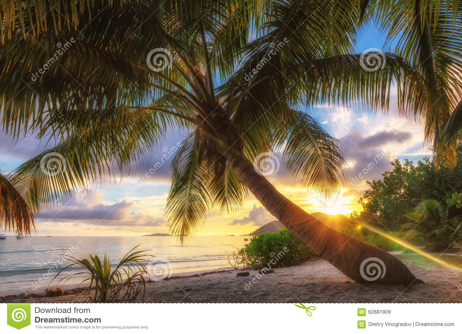 日出的棕榈滩在普拉兰岛海岛,塞舌尔群岛上