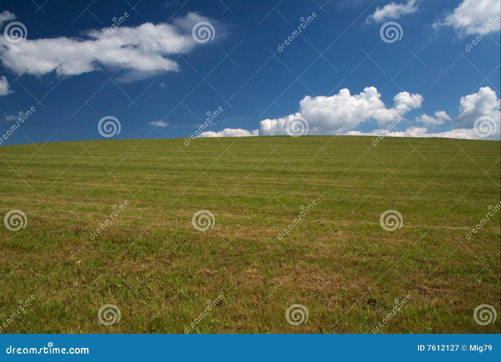 日放牧地带夏天