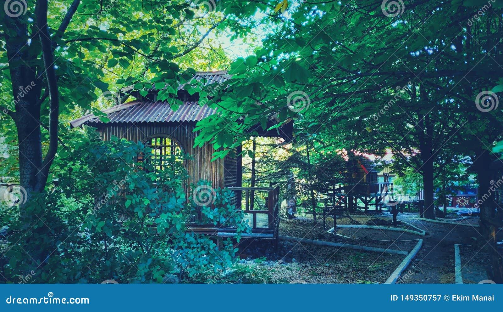 日本亭子在庭院里