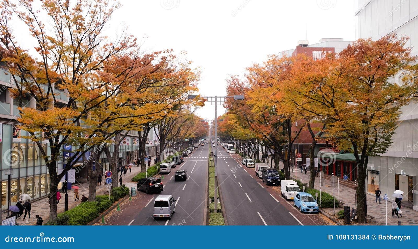 日本11月14,2017东京:东京日本城市街道在harajuku区域与树和秋叶在街道的双方