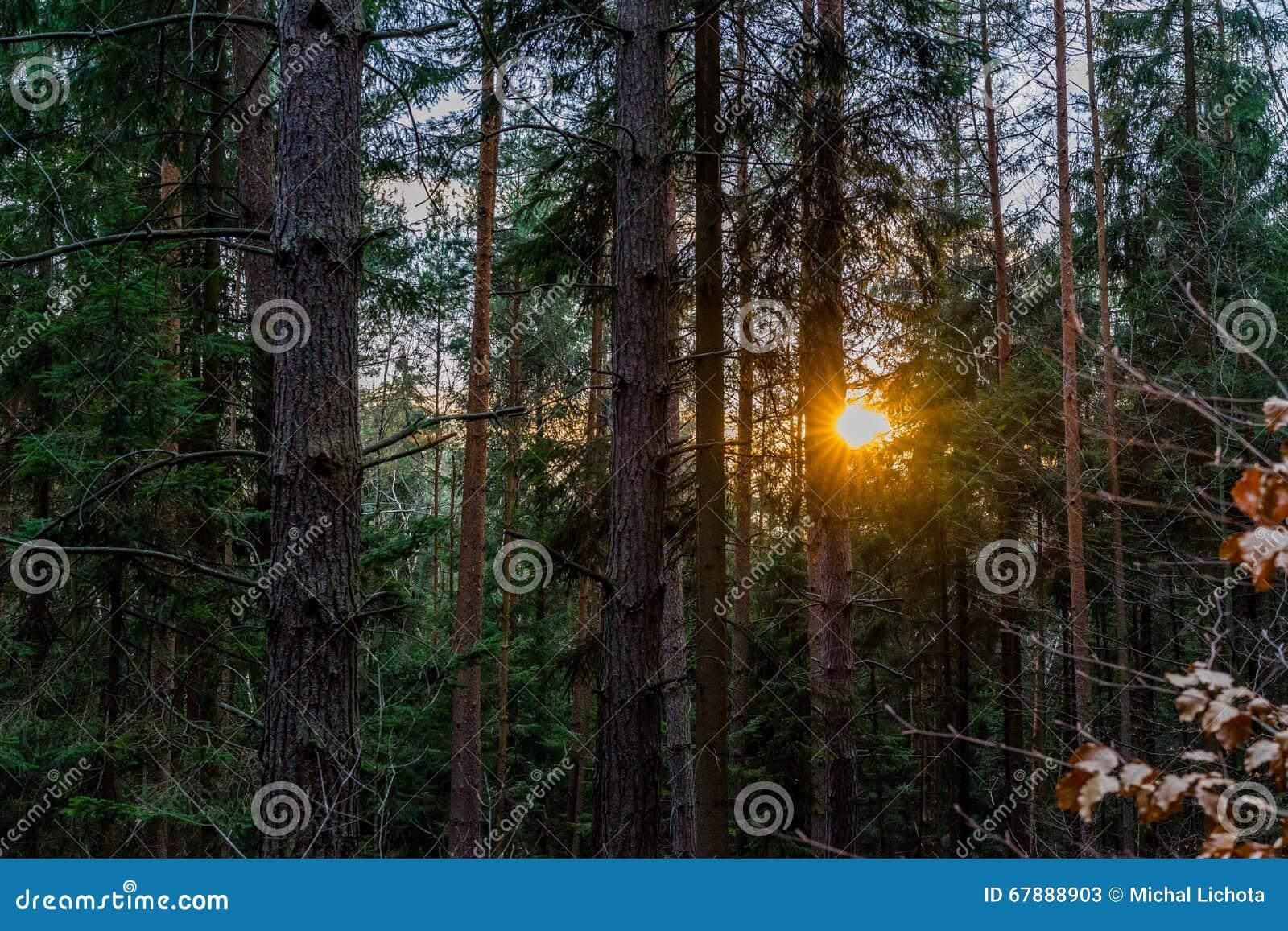 日落在山的一个森林里在晚冬季节