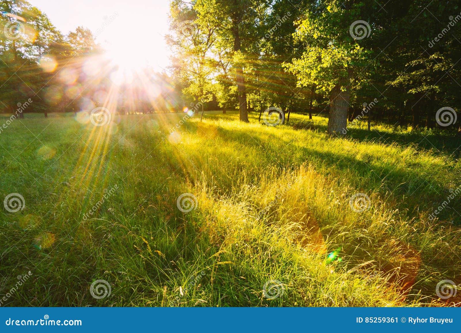 日落或日出在森林风景 与自然的太阳阳光