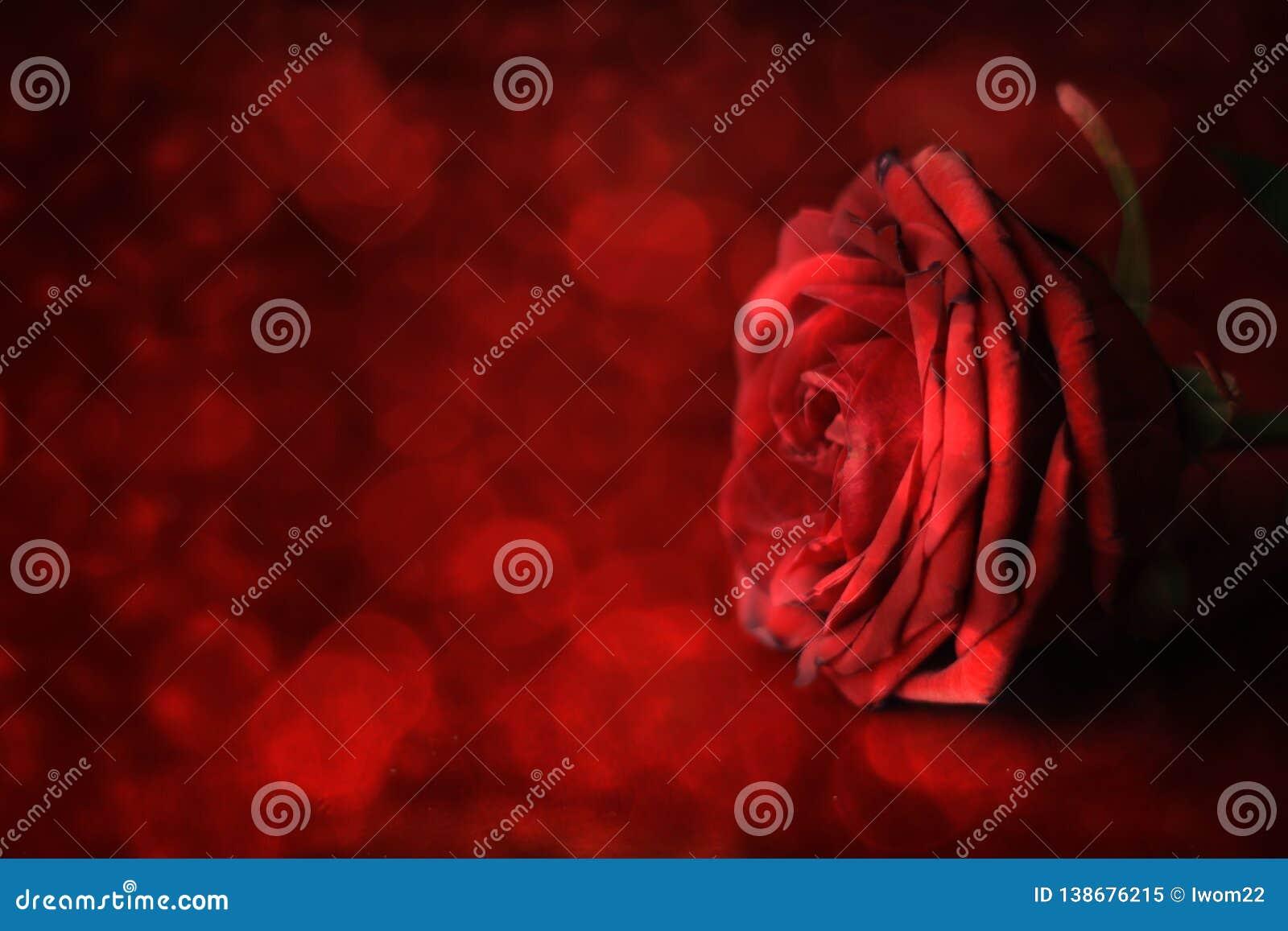 日s华伦泰 在defocused背景的红色玫瑰