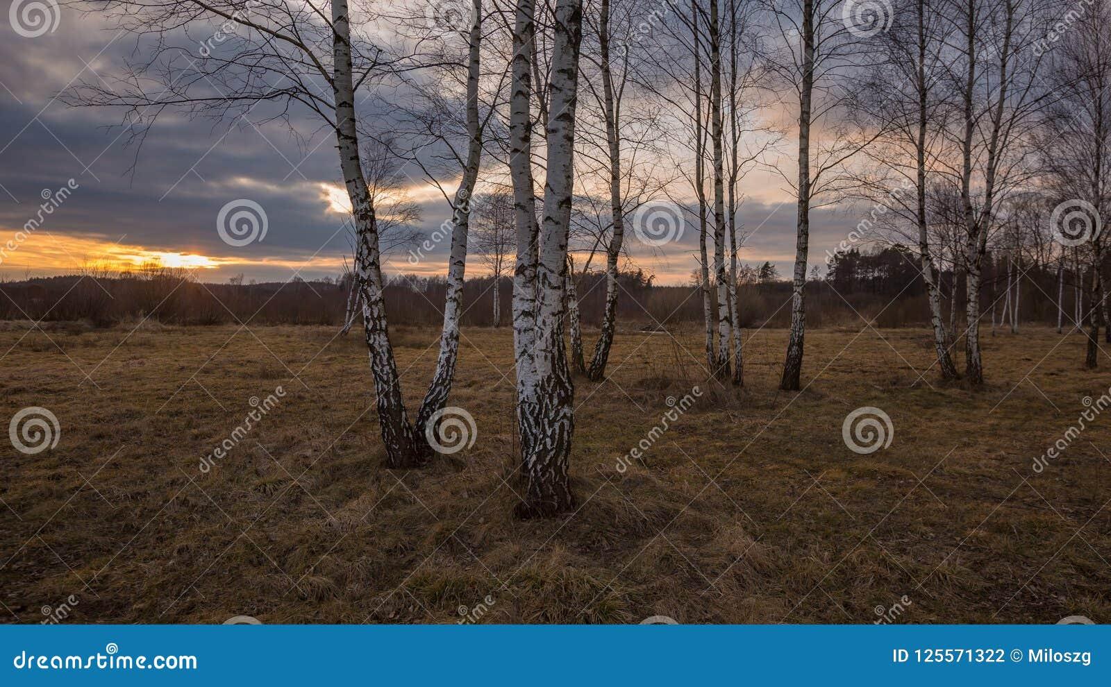 早春天森林风景