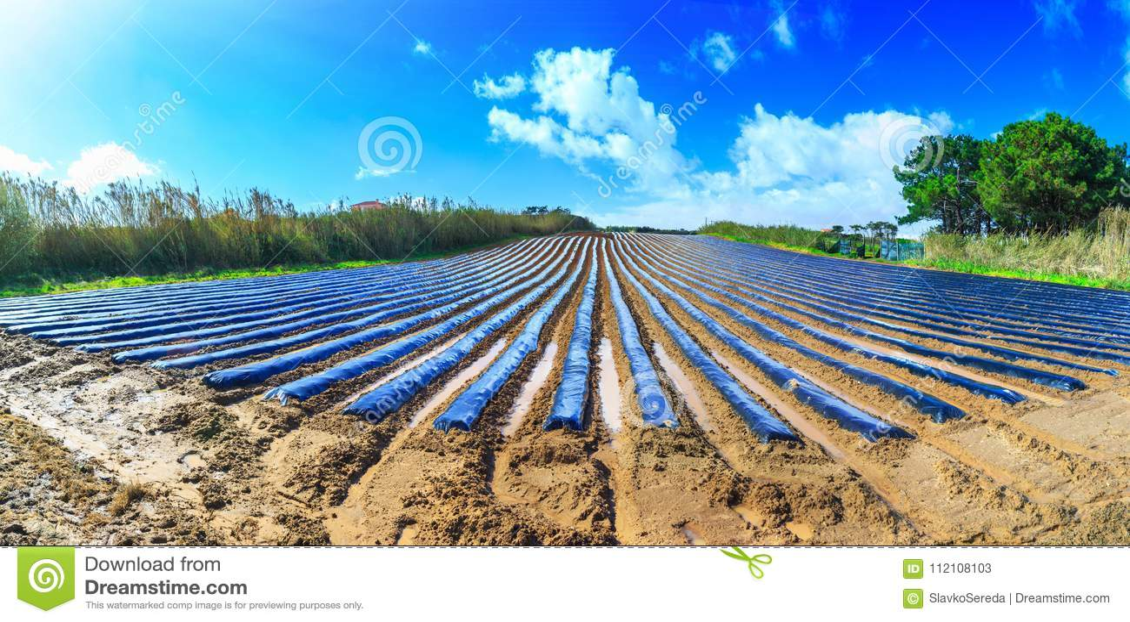 早春天耕种典型的农业技术