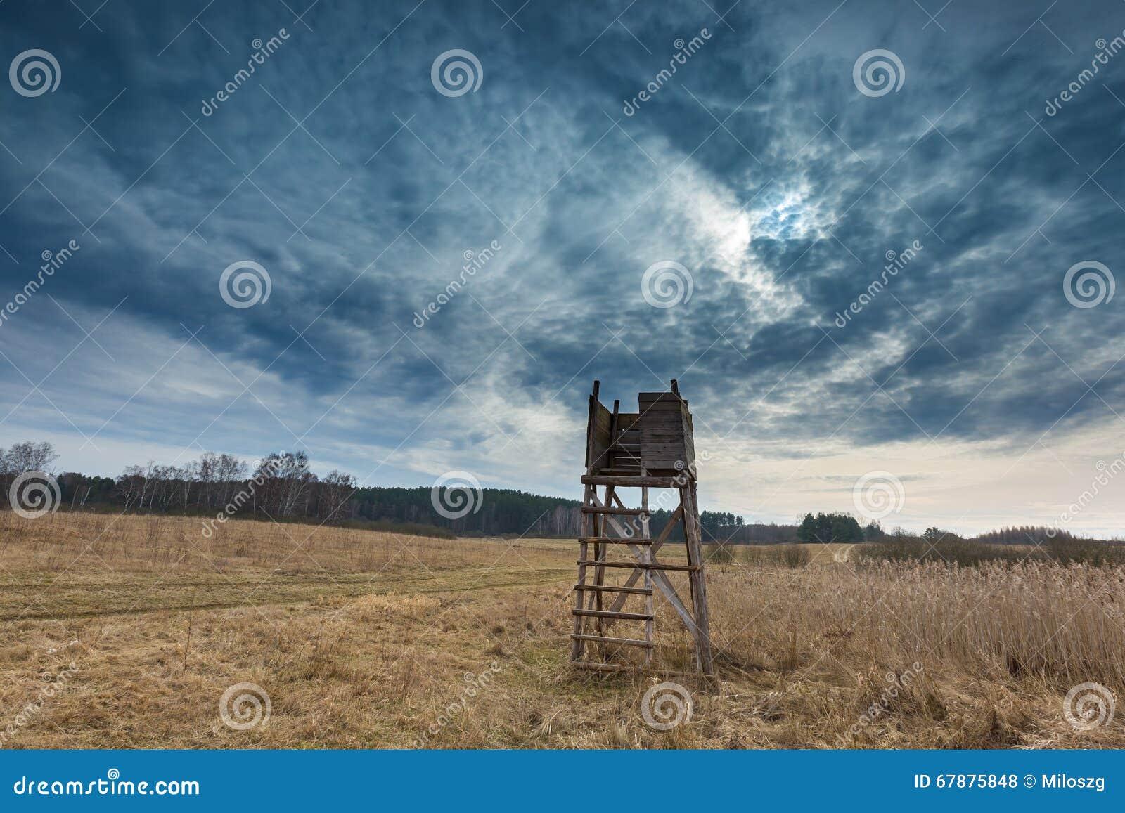 早春天草甸风景在波兰