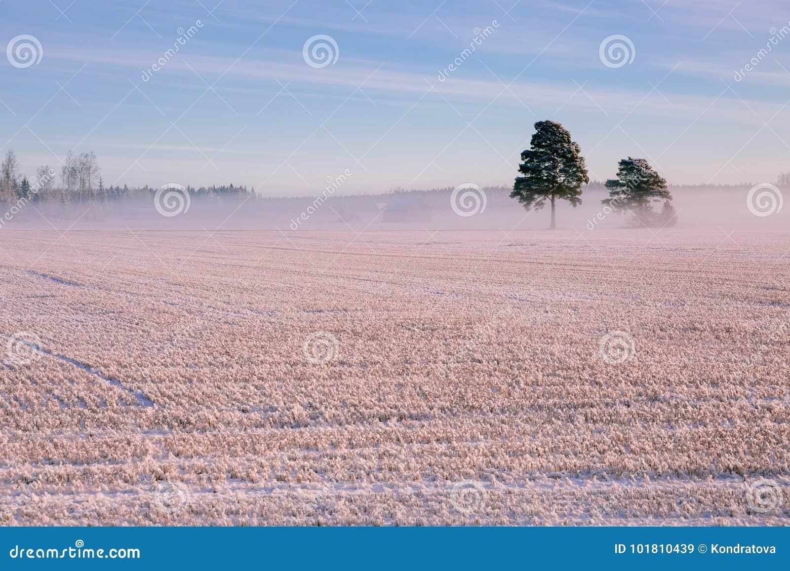 早晨冬天风景 雪树和冷淡的雾在领域