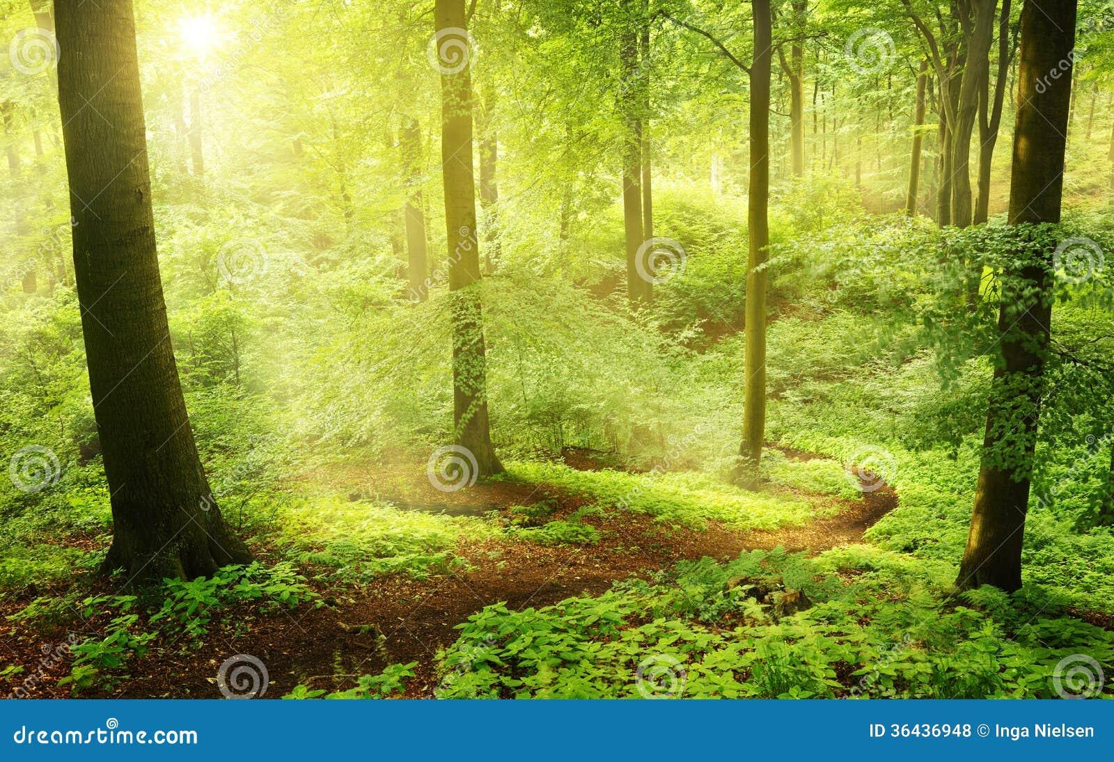 早晨在一个绿色夏天森林里