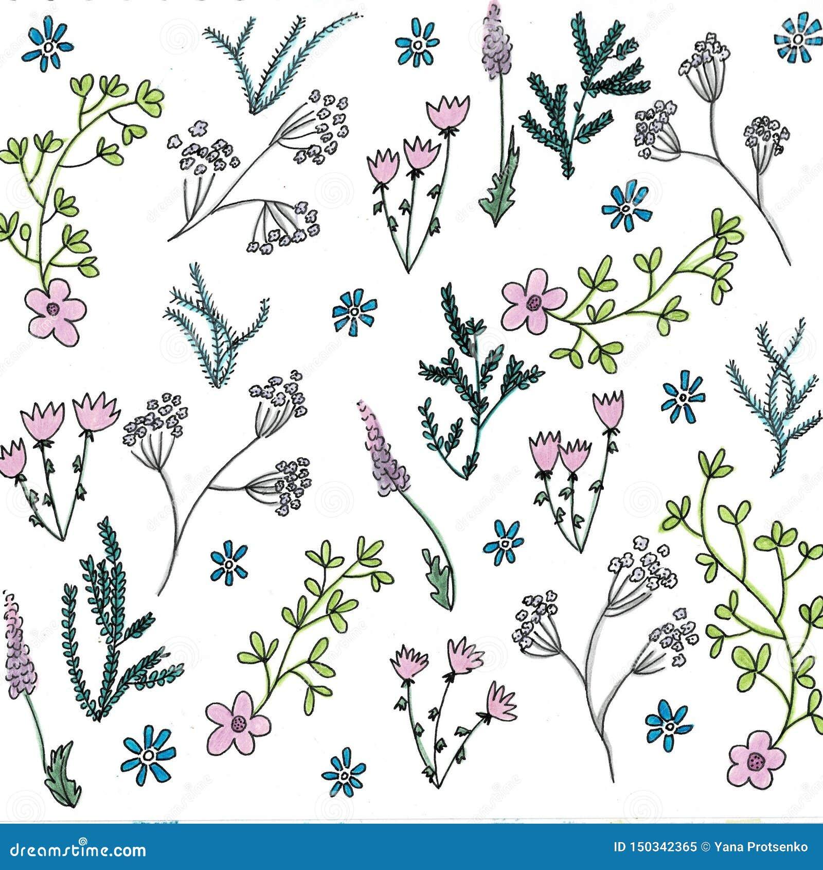 时髦明亮的夏天开花的庭院概述和许多手绘的花种类花卉在无缝的样式