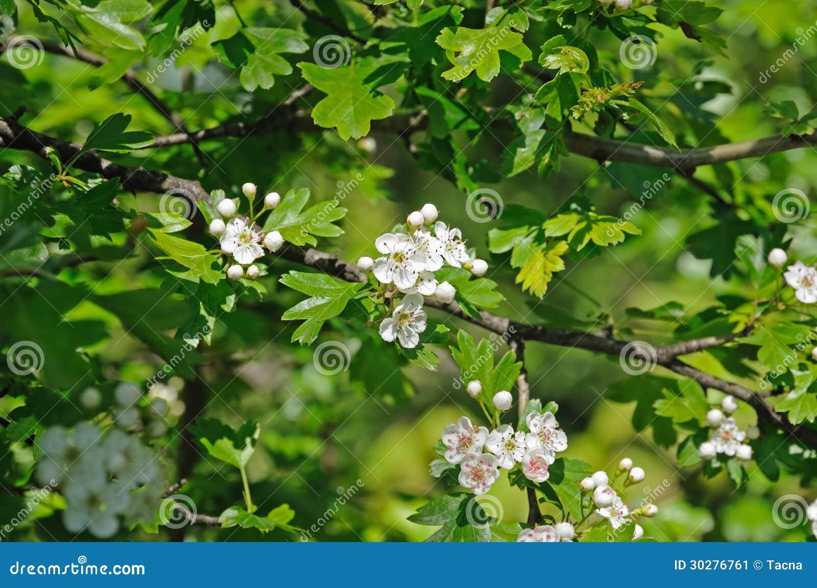 明亮的被点燃的树和白花