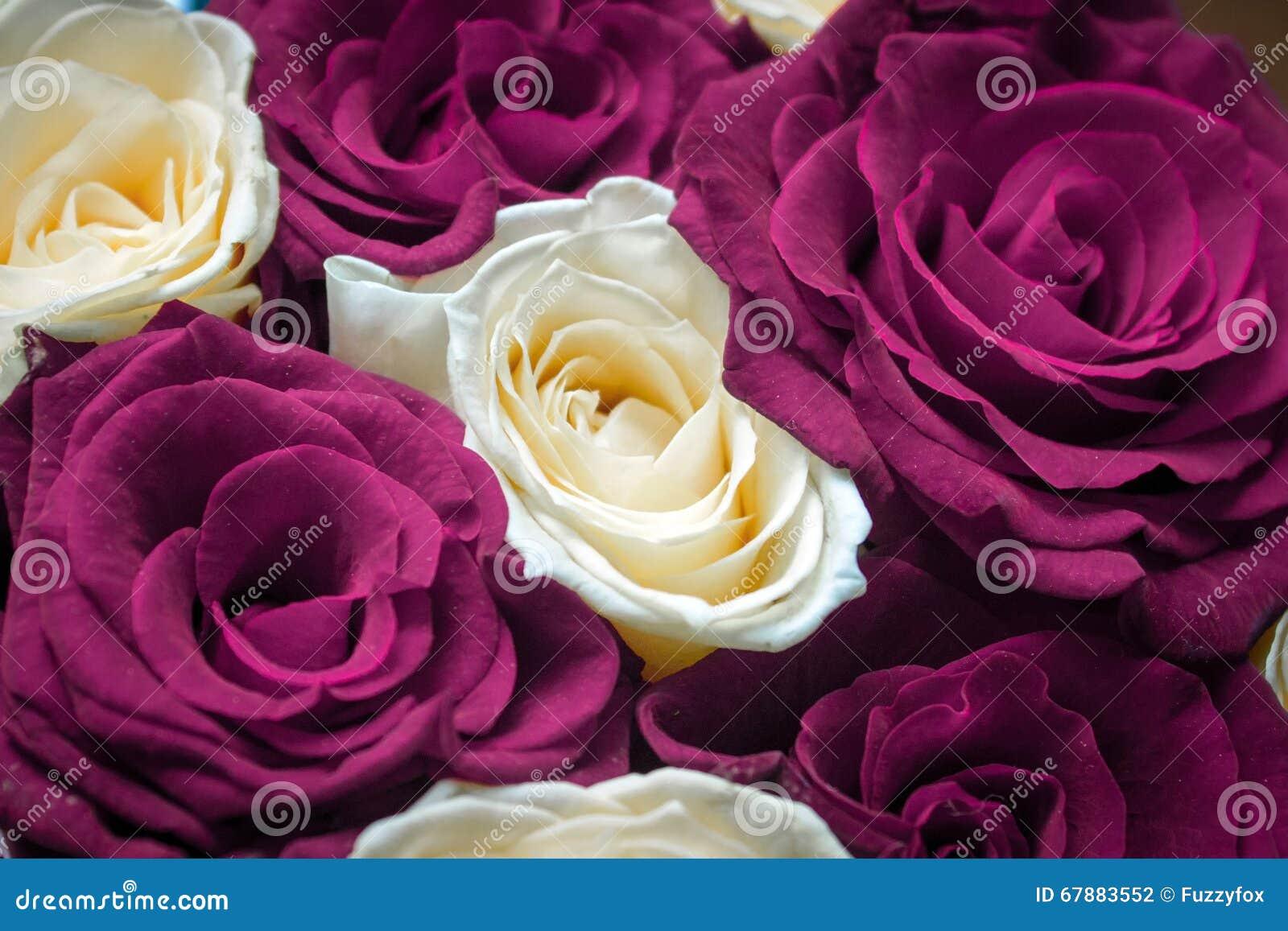 明信片的,日历红色和黄色花卉玫瑰背景