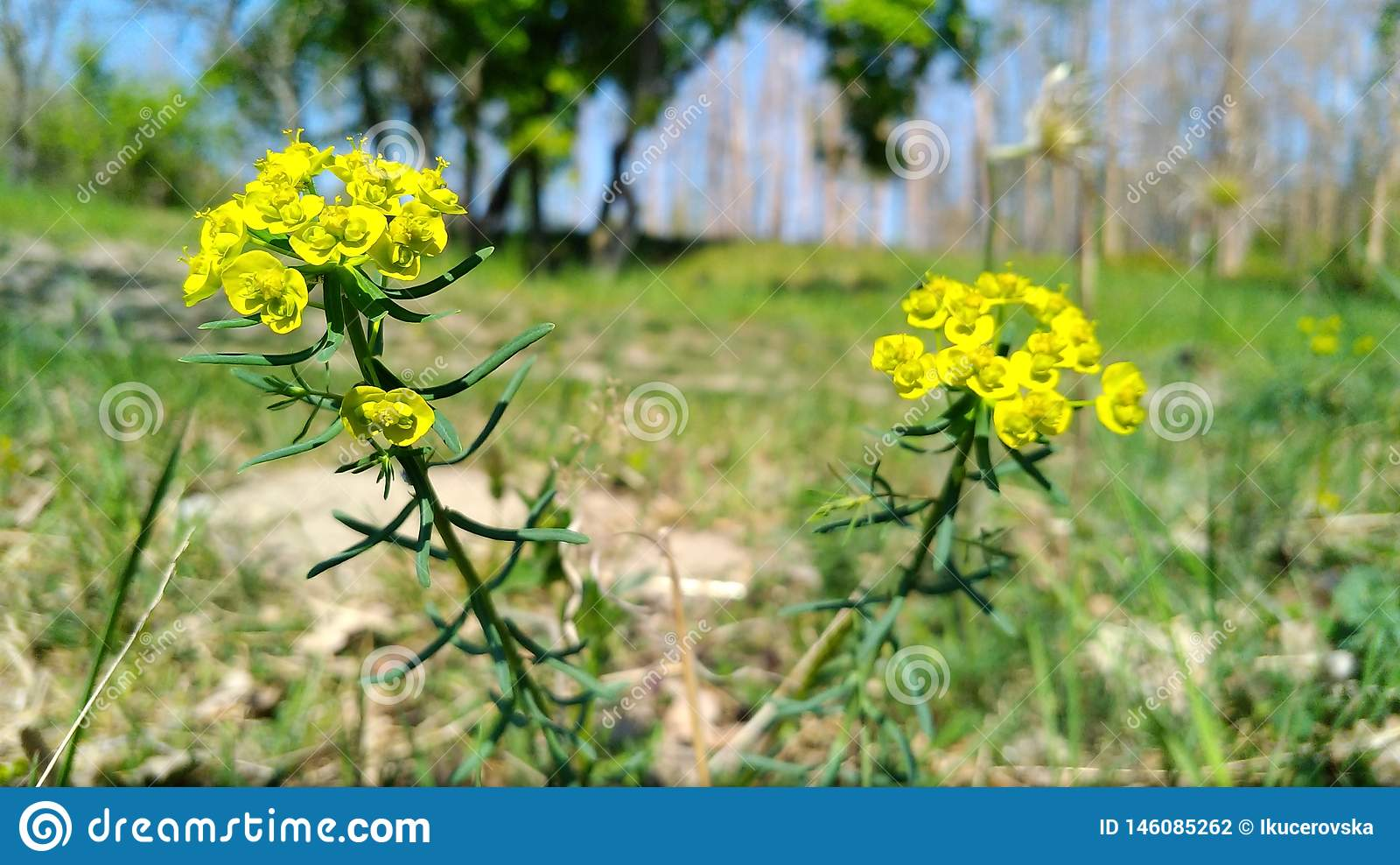 春天和它的最好与黄色花
