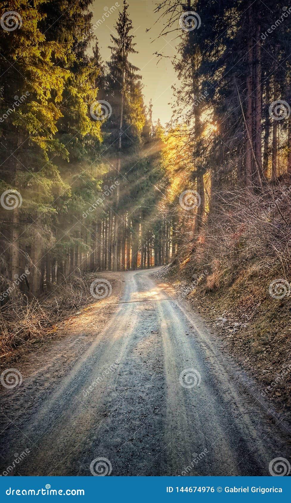春天在发光森林胡同的树中的太阳光芒