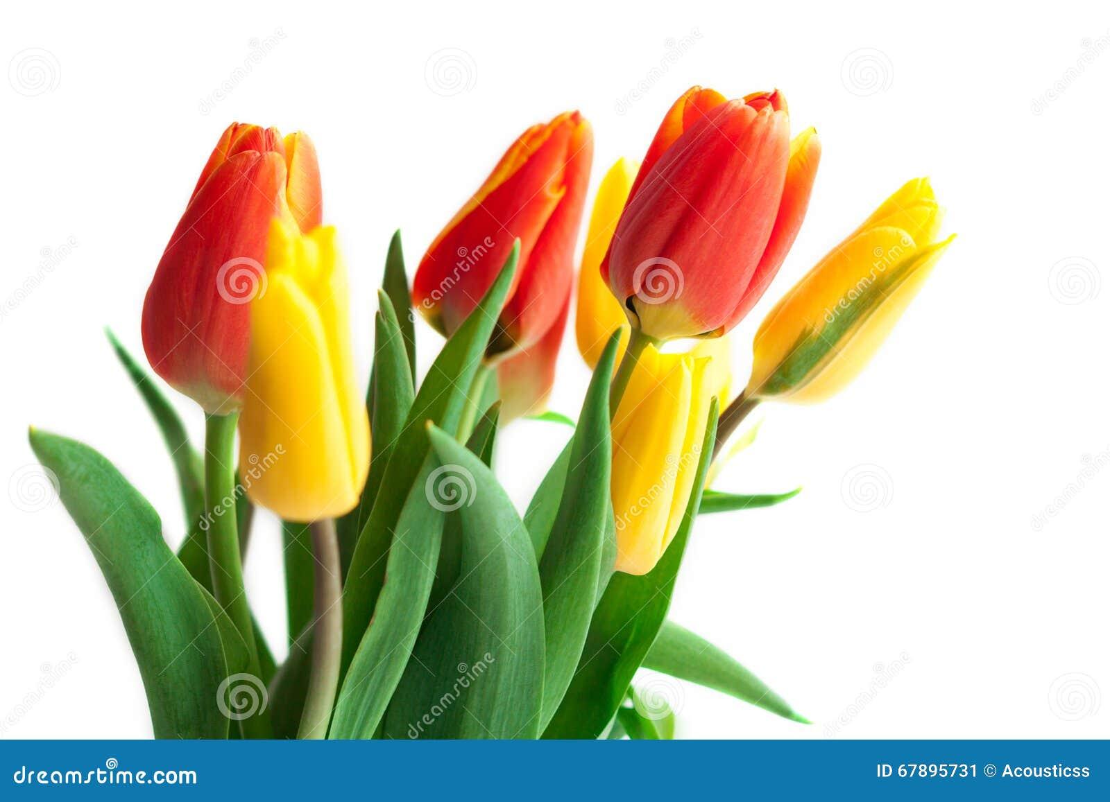 春天在白色的郁金香花 郁金香束 花卉边界Des