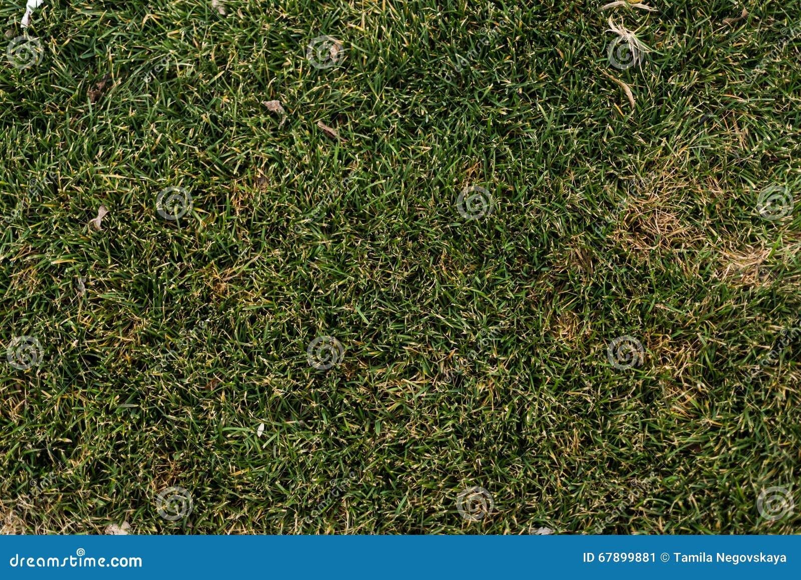 春天小绿草背景纹理