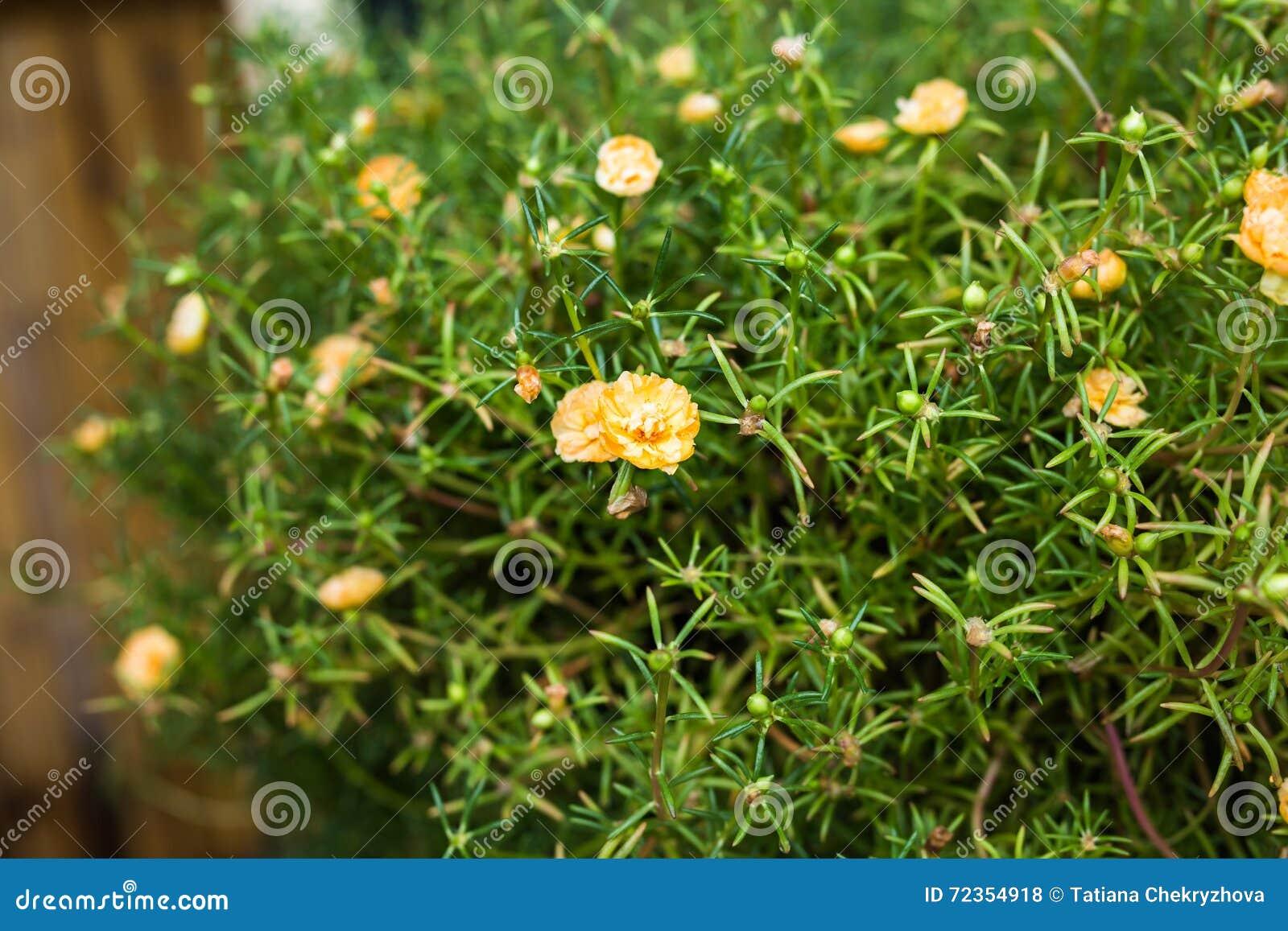 春天或夏天背景与美丽的黄色花