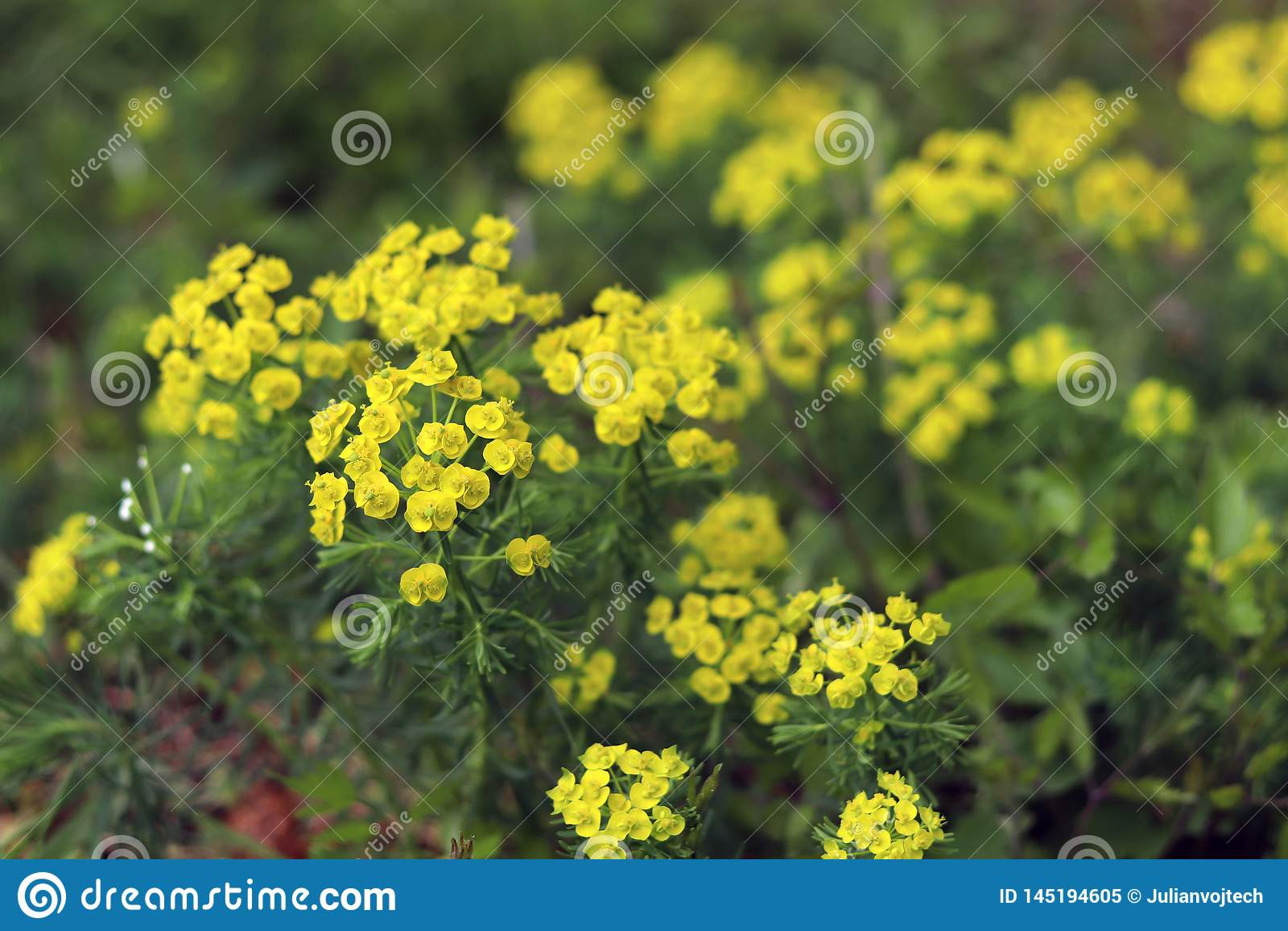 春天有花的乡下草甸 中立背景的抽象关闭