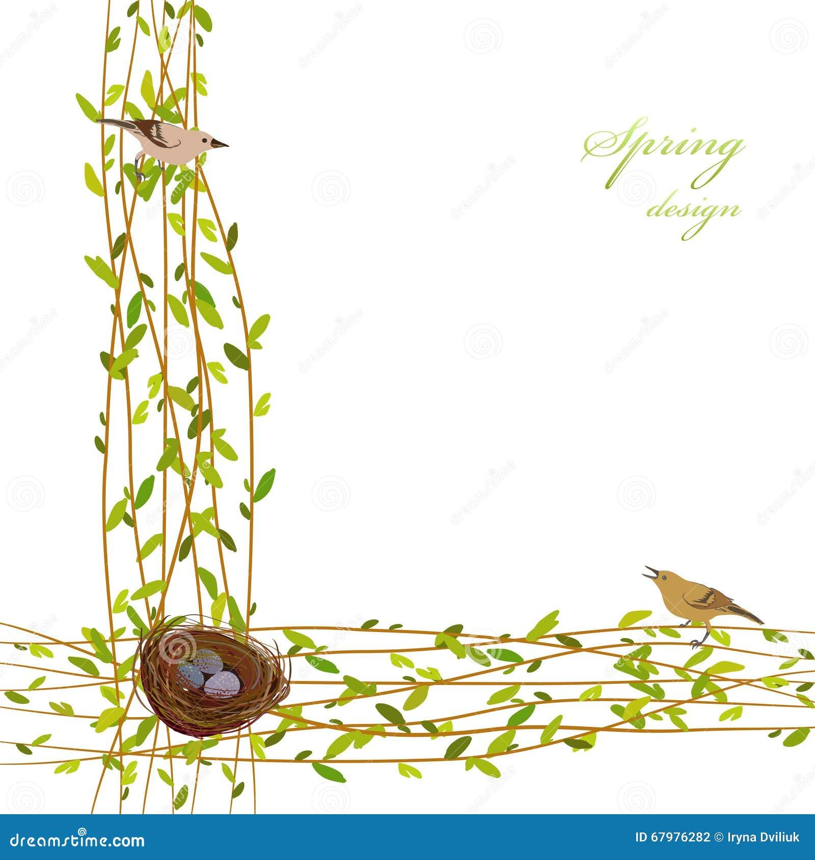 春天背景分支,筑巢,鸟和鸡蛋 毗邻与紫皮柳树的枝杈和绿色叶子的框架图片