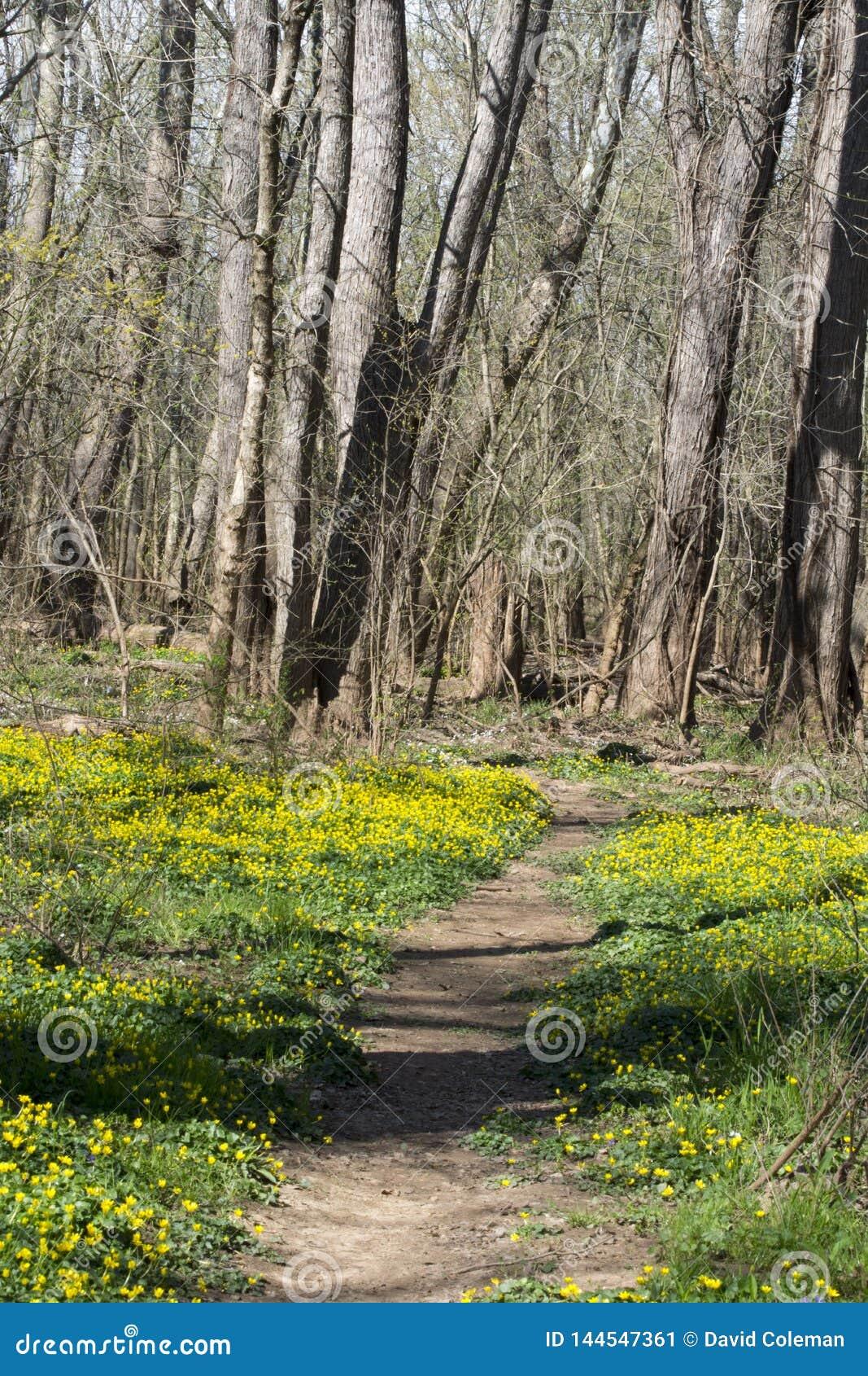 春天花排行了足迹