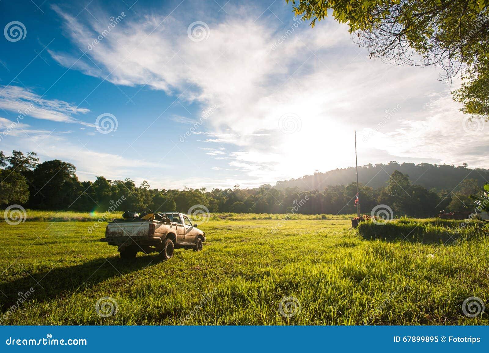 春天草和森林的领域