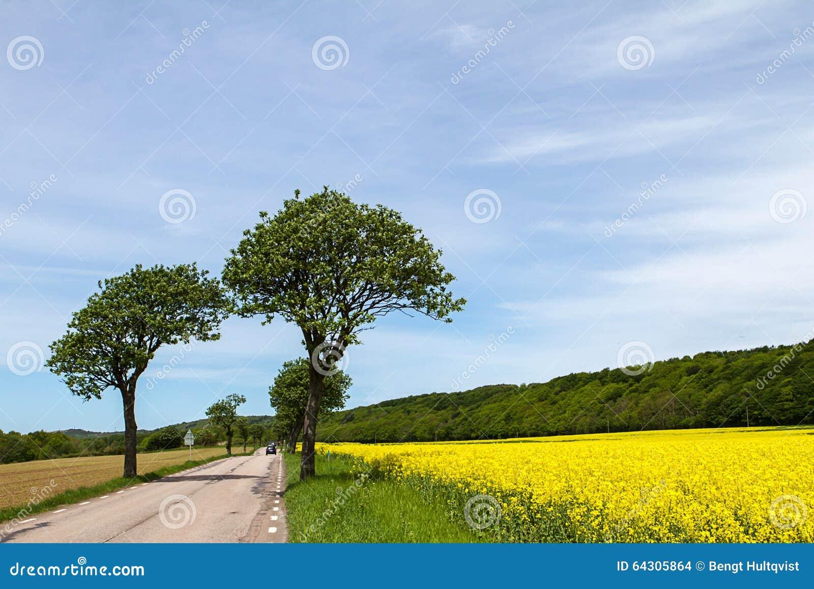 春天风景在南瑞典