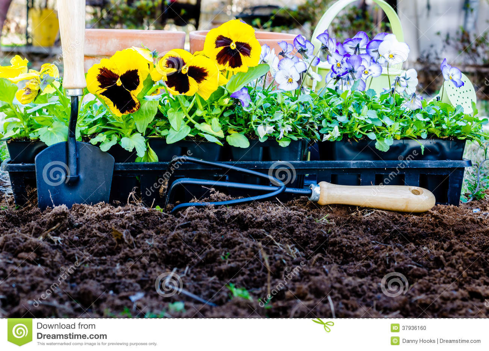 春天从事园艺