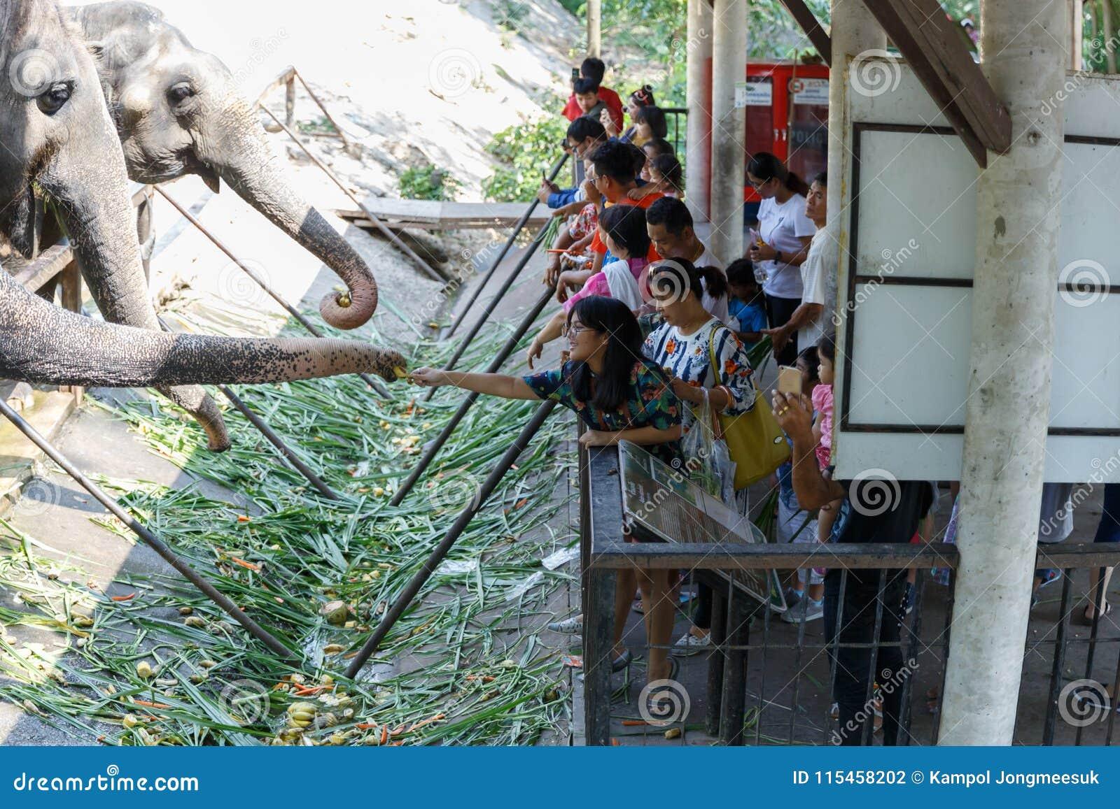 春武里市/泰国- 2018年4月15日:哺养对大象` s树干的青年人在Khao Kheow开放动物园里
