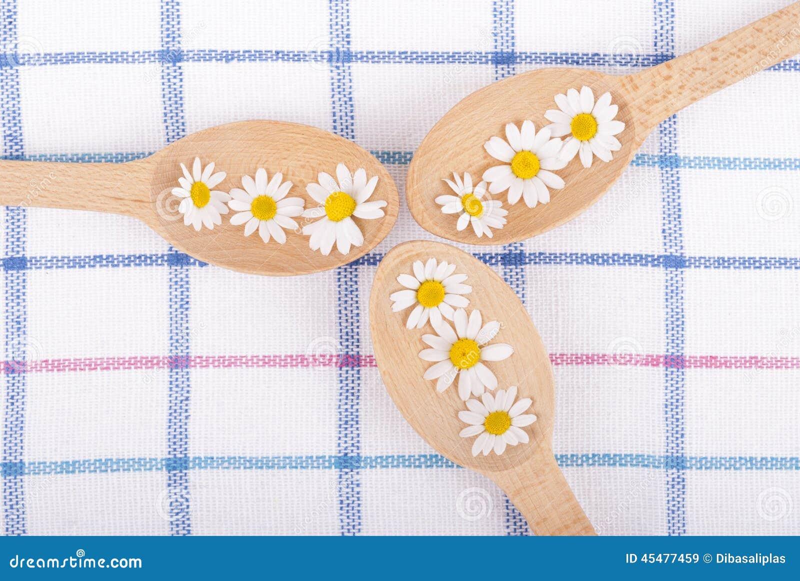 春黄菊木匙子