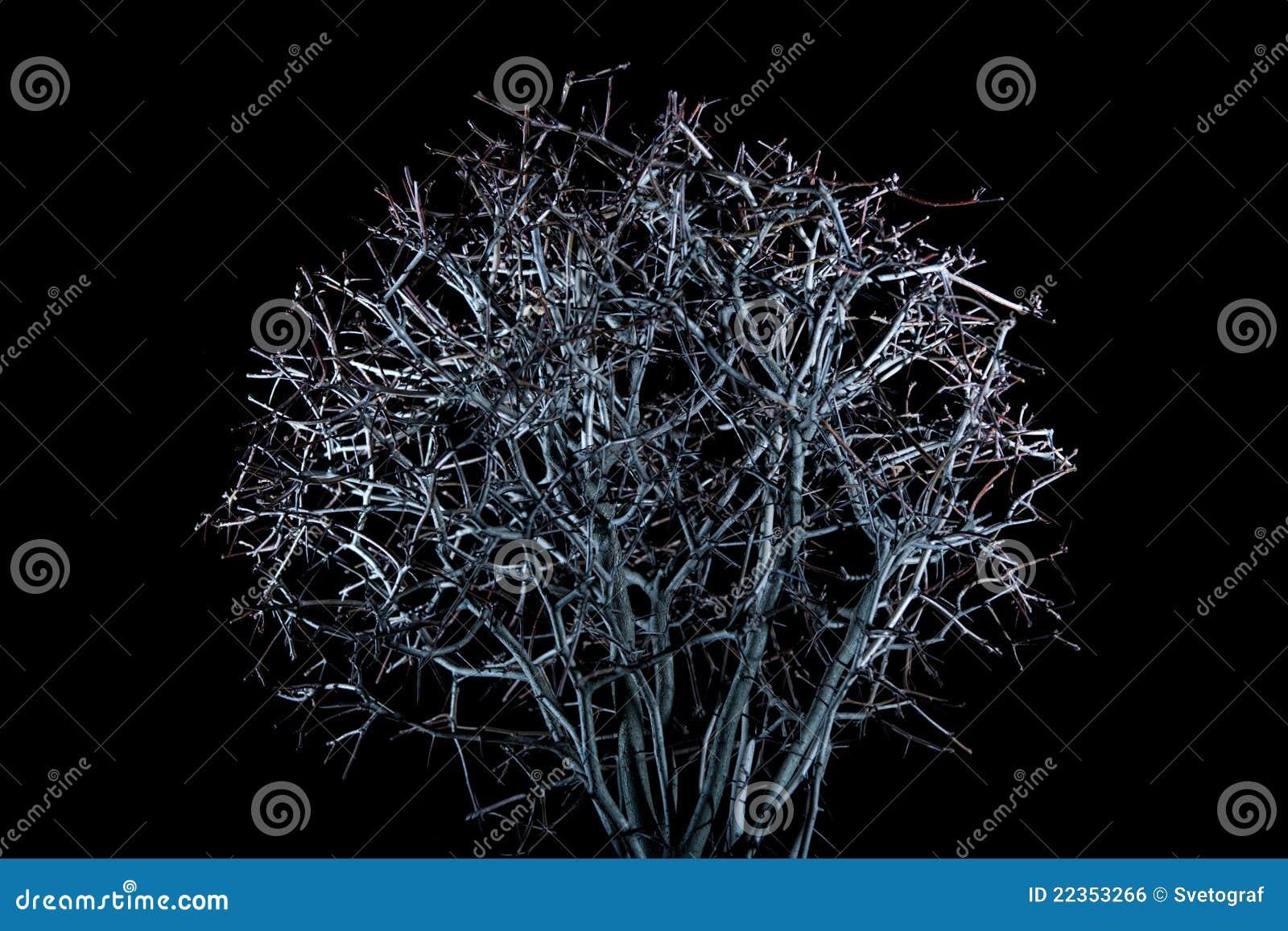 晚上结构树