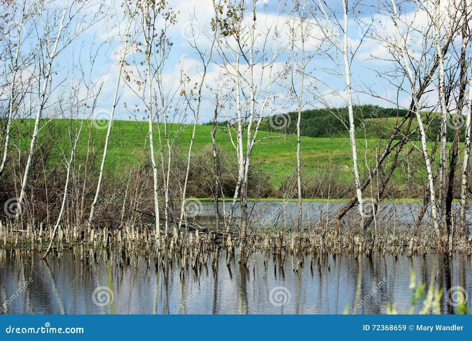 普遍的树池塘