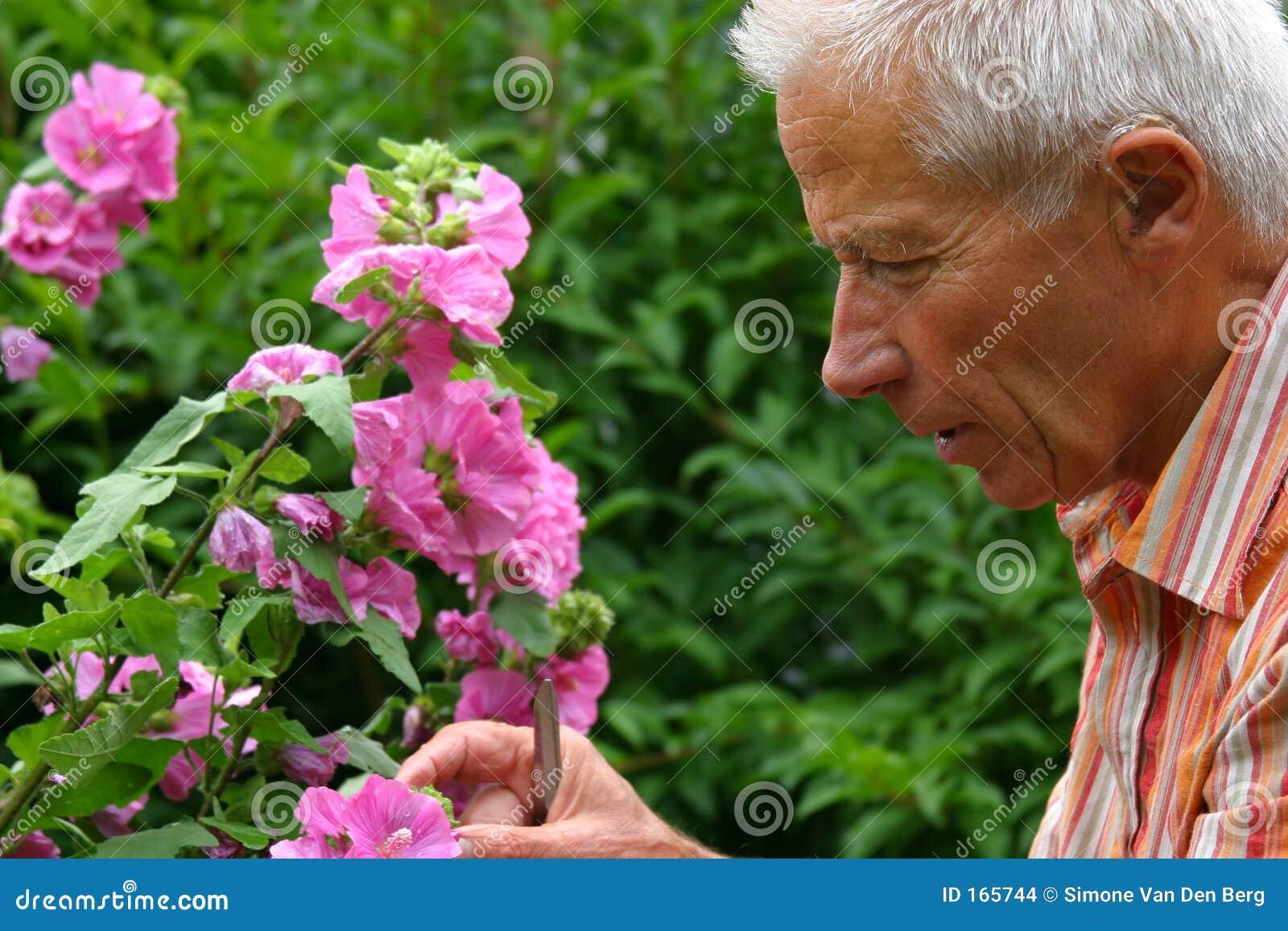 更老从事园艺的人