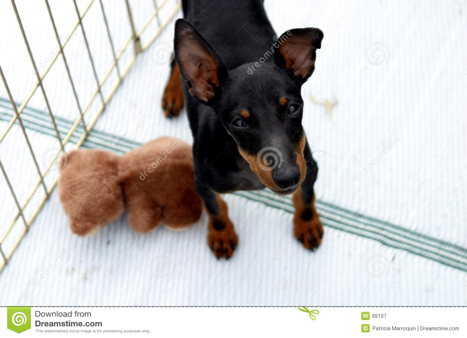 曼彻斯特狗玩具