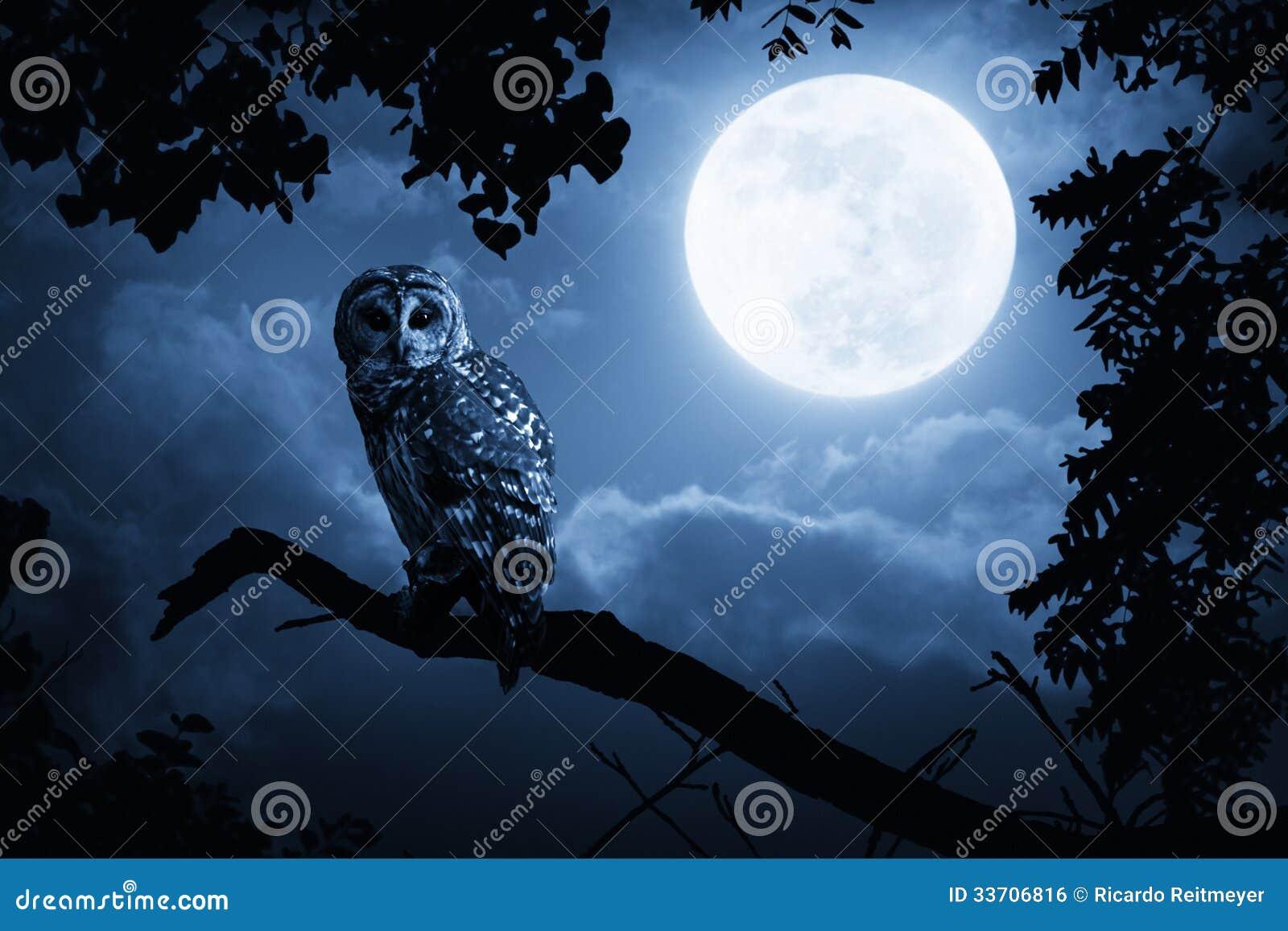 满月专心地照亮的猫头鹰手表在万圣夜夜上
