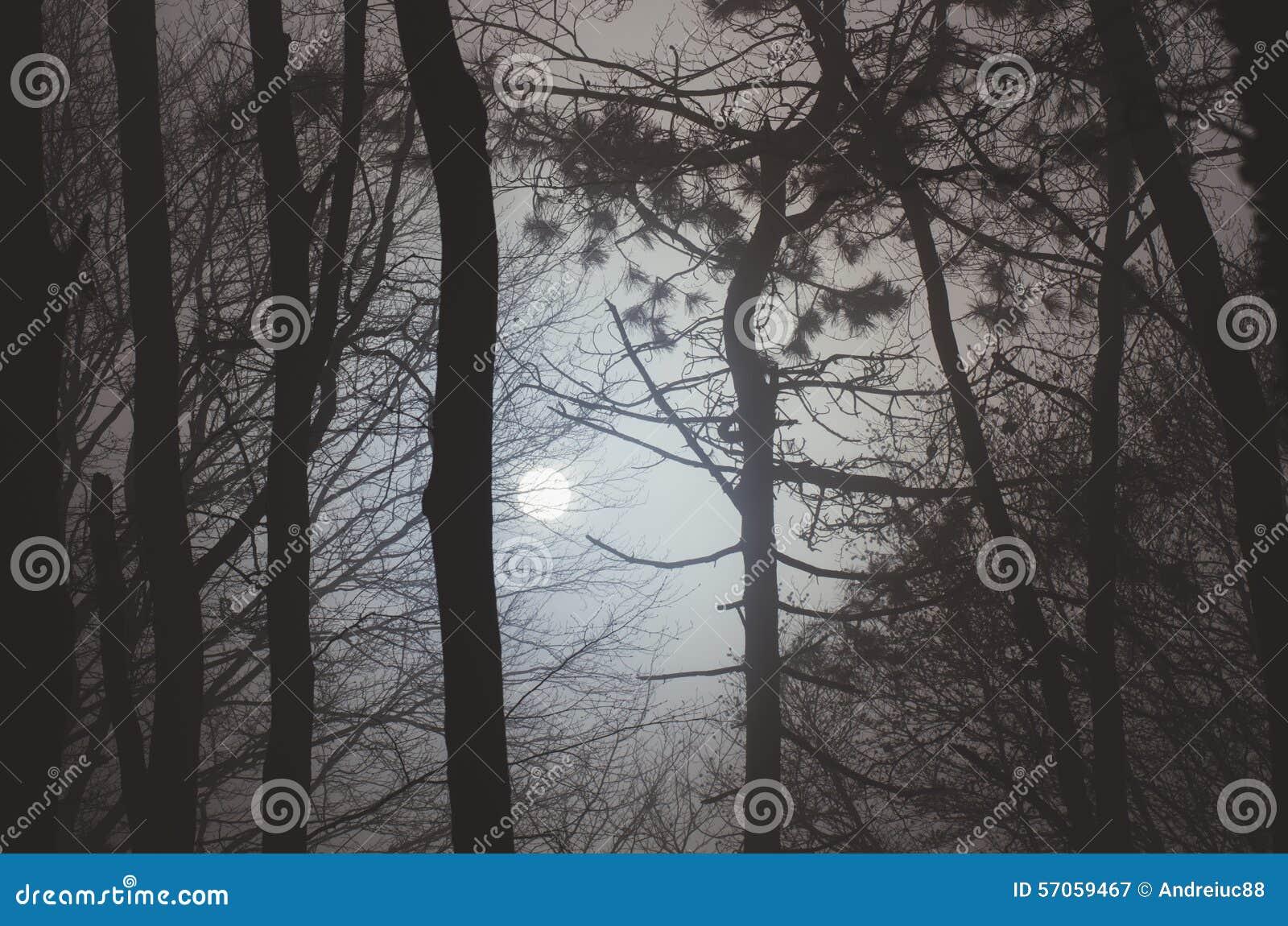 月亮低谷树在晚上