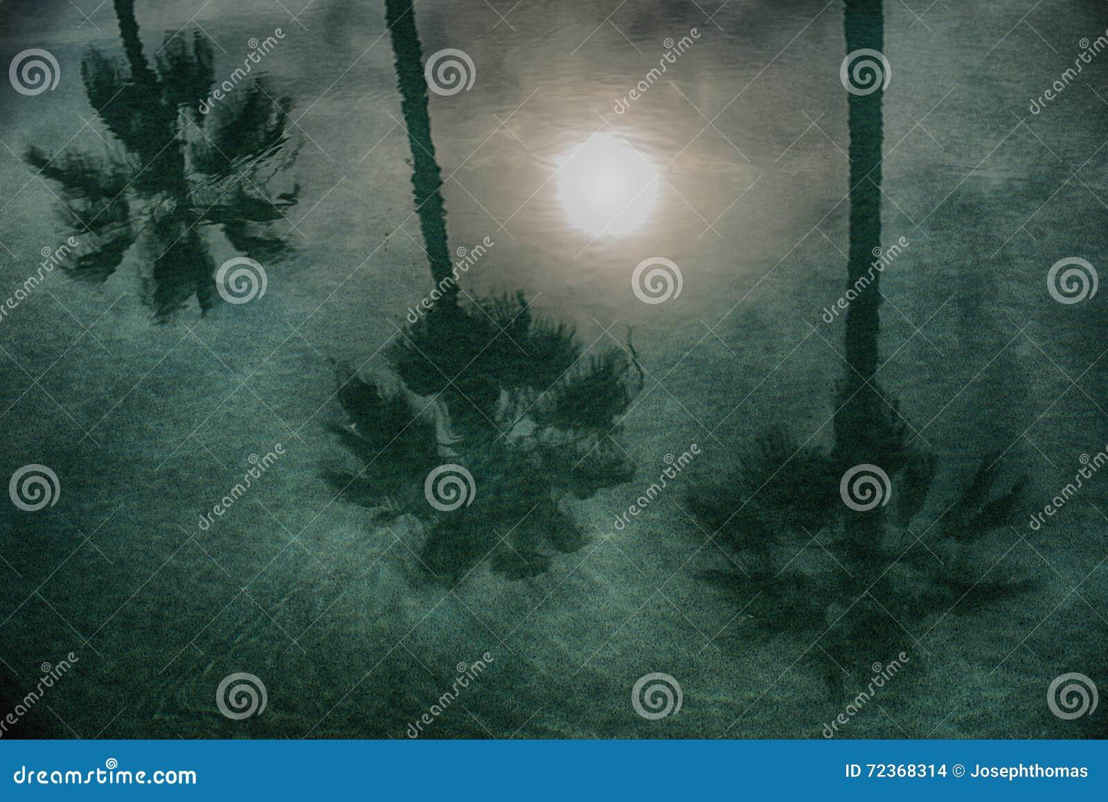月亮和棕榈树的美好的反射在水的
