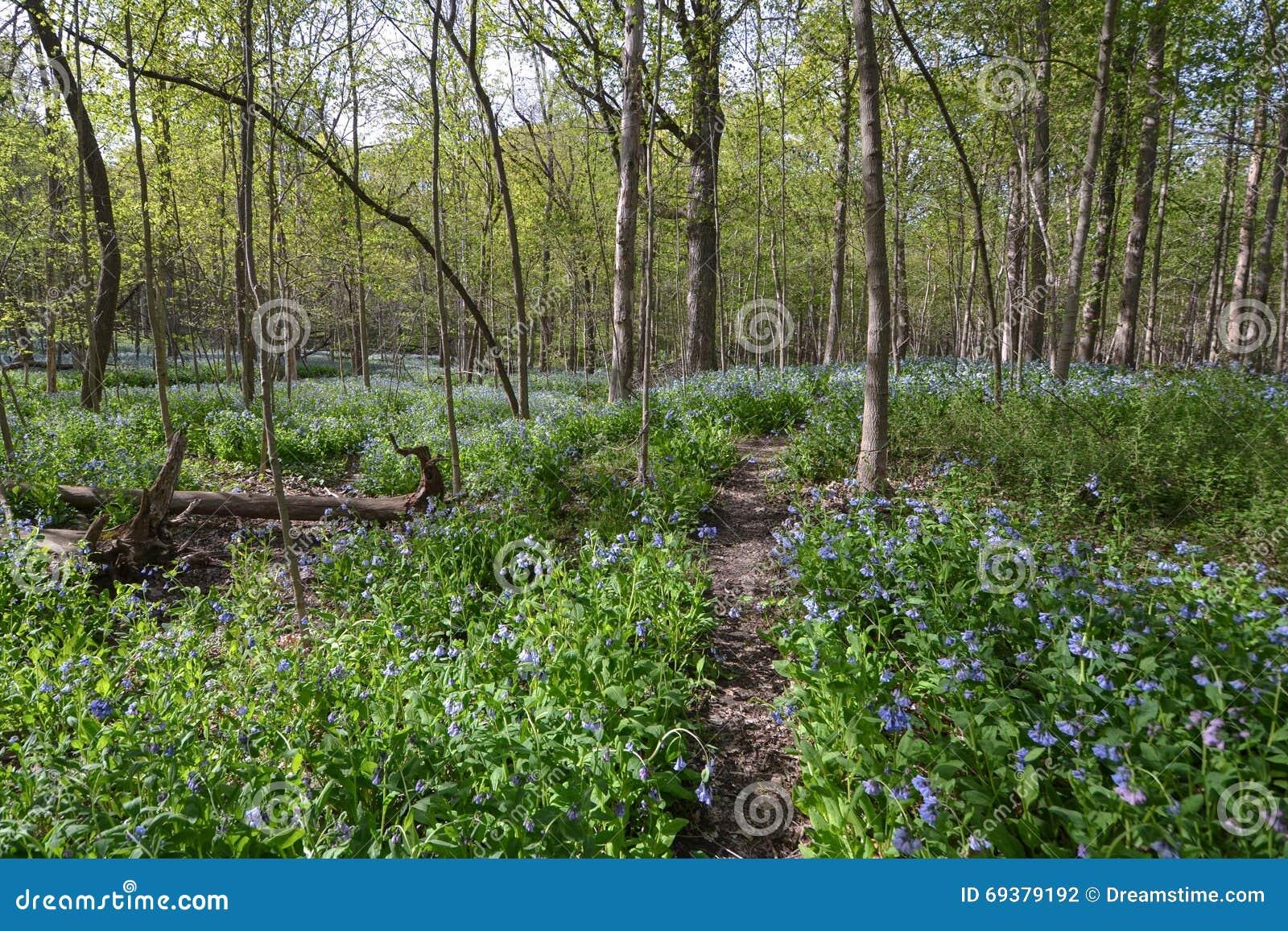 5月会开蓝色钟形花的草森林幻想